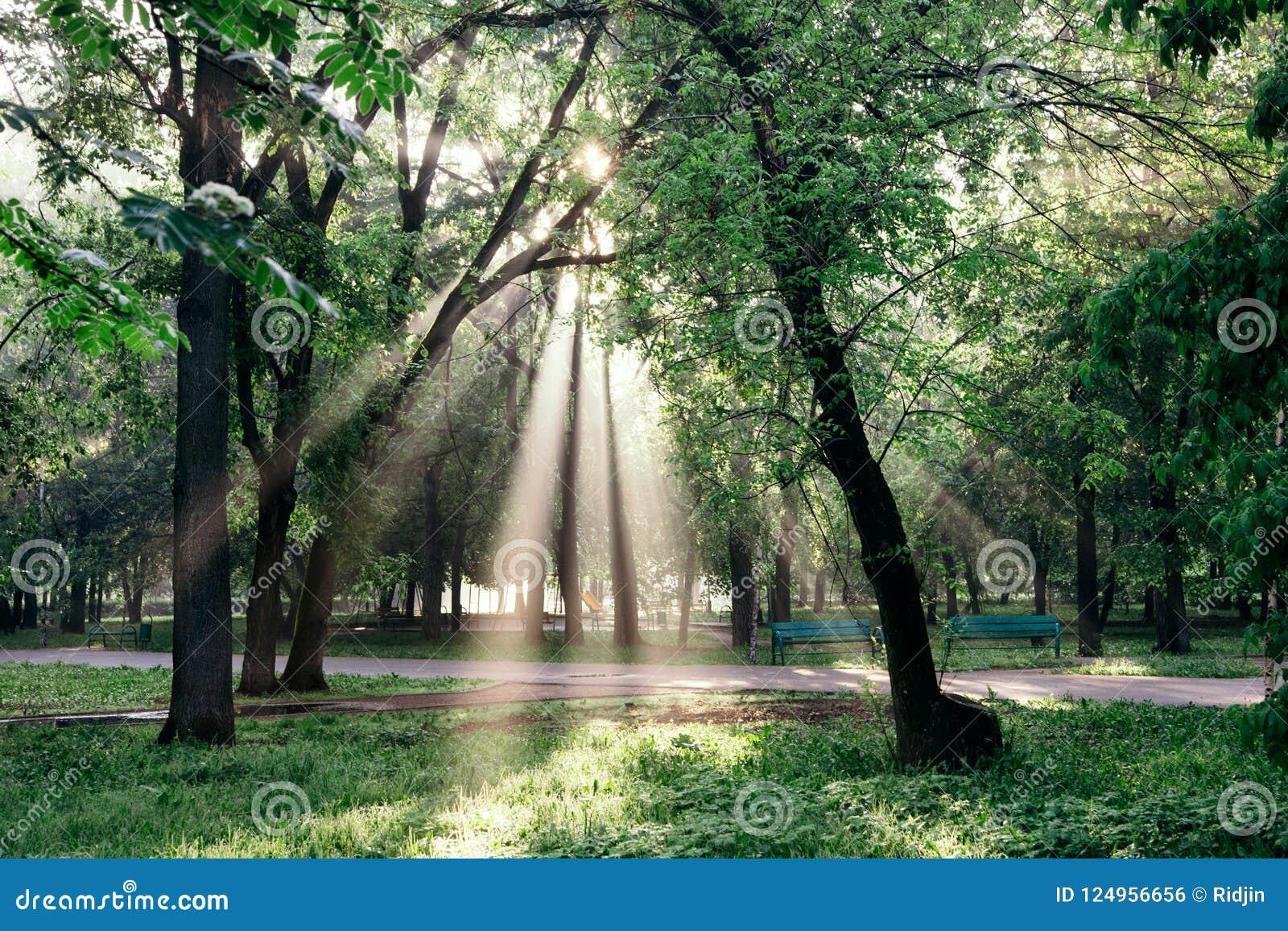 Un paesaggio con un parco e un sole di mattina rays facendo il loro modo tramite le nuvole e le foglie negli alberi