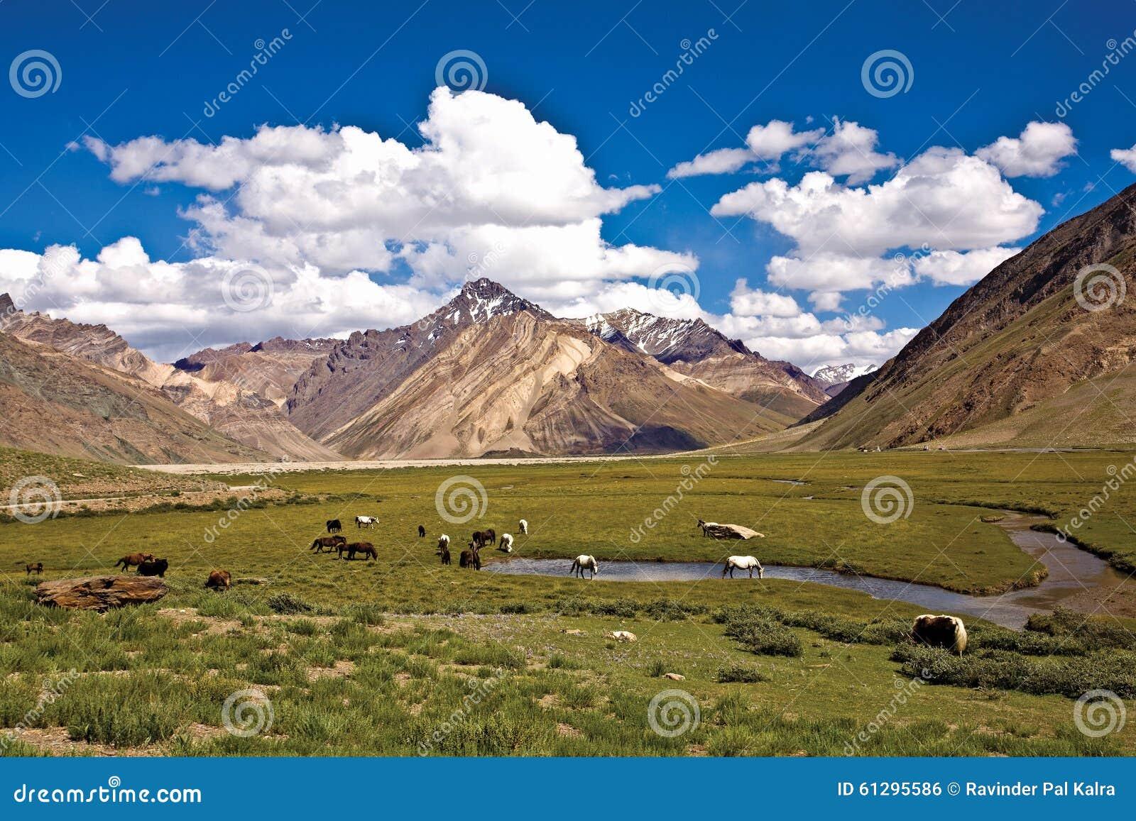 Un paisaje cerca del monasterio de Rangdum, valle de Zanskar, Ladakh, Jammu y Cachemira, la India