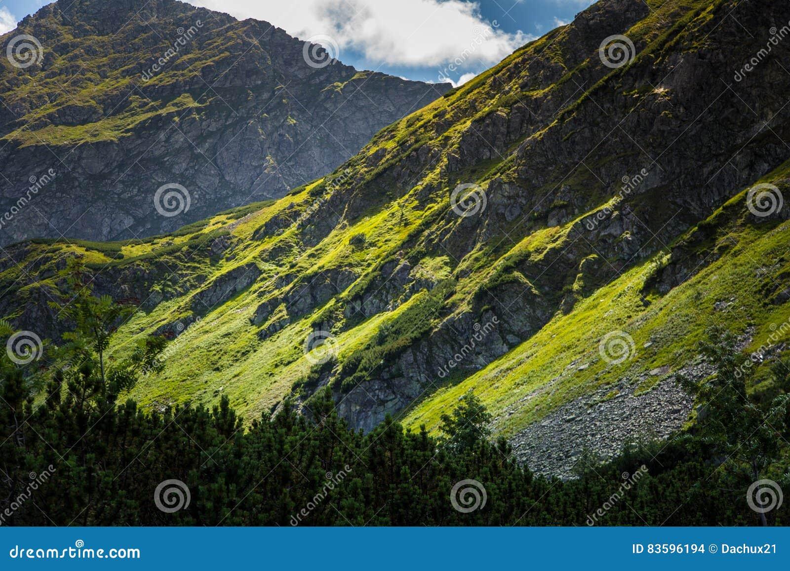 Un paisaje hermoso de la montaña sobre hilera de árboles
