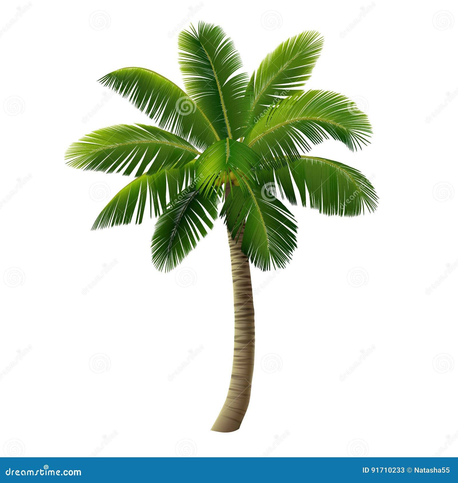 palmier a noix en 4 lettres