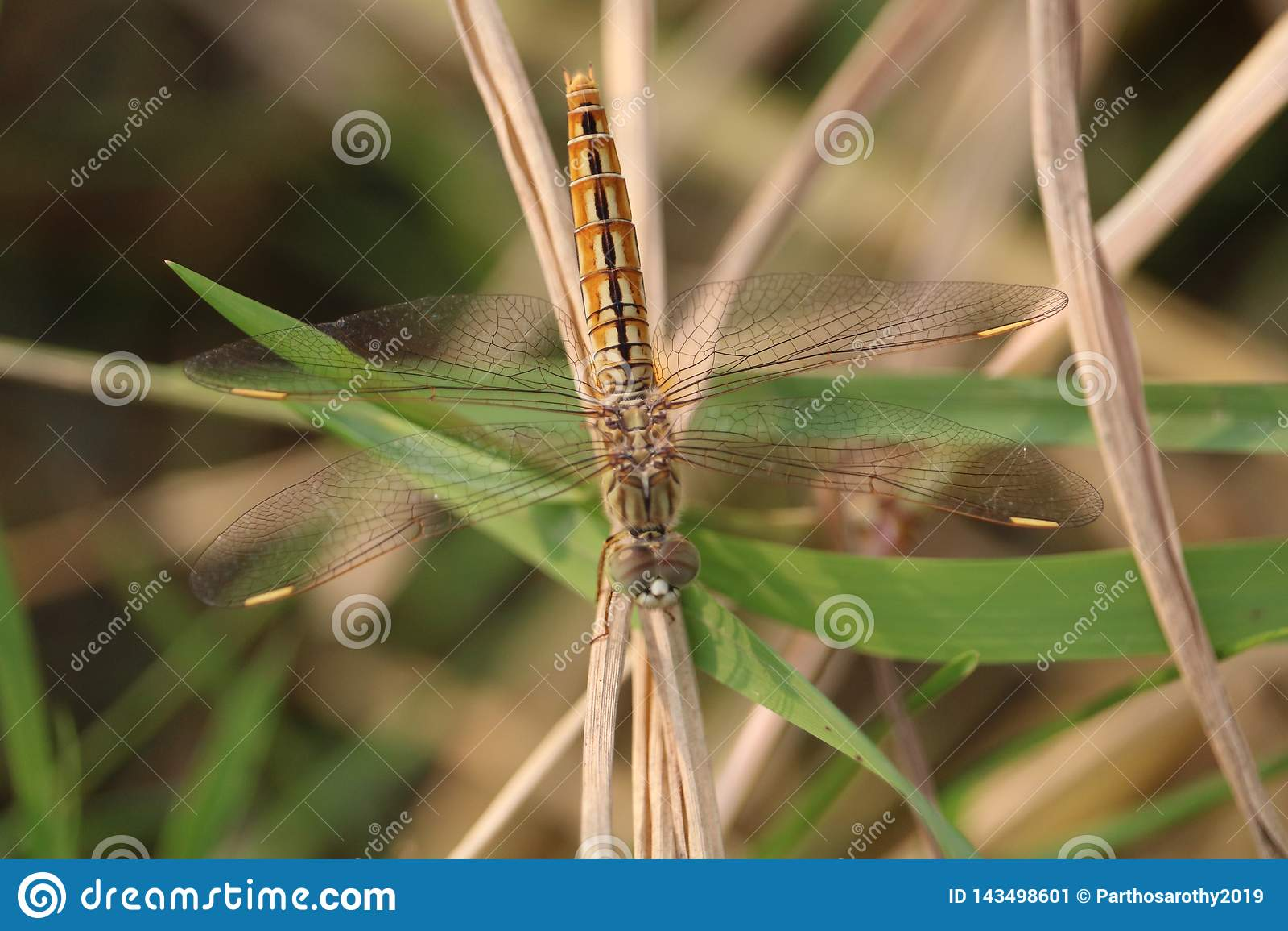 Un papillon sur la feuille de l herbe