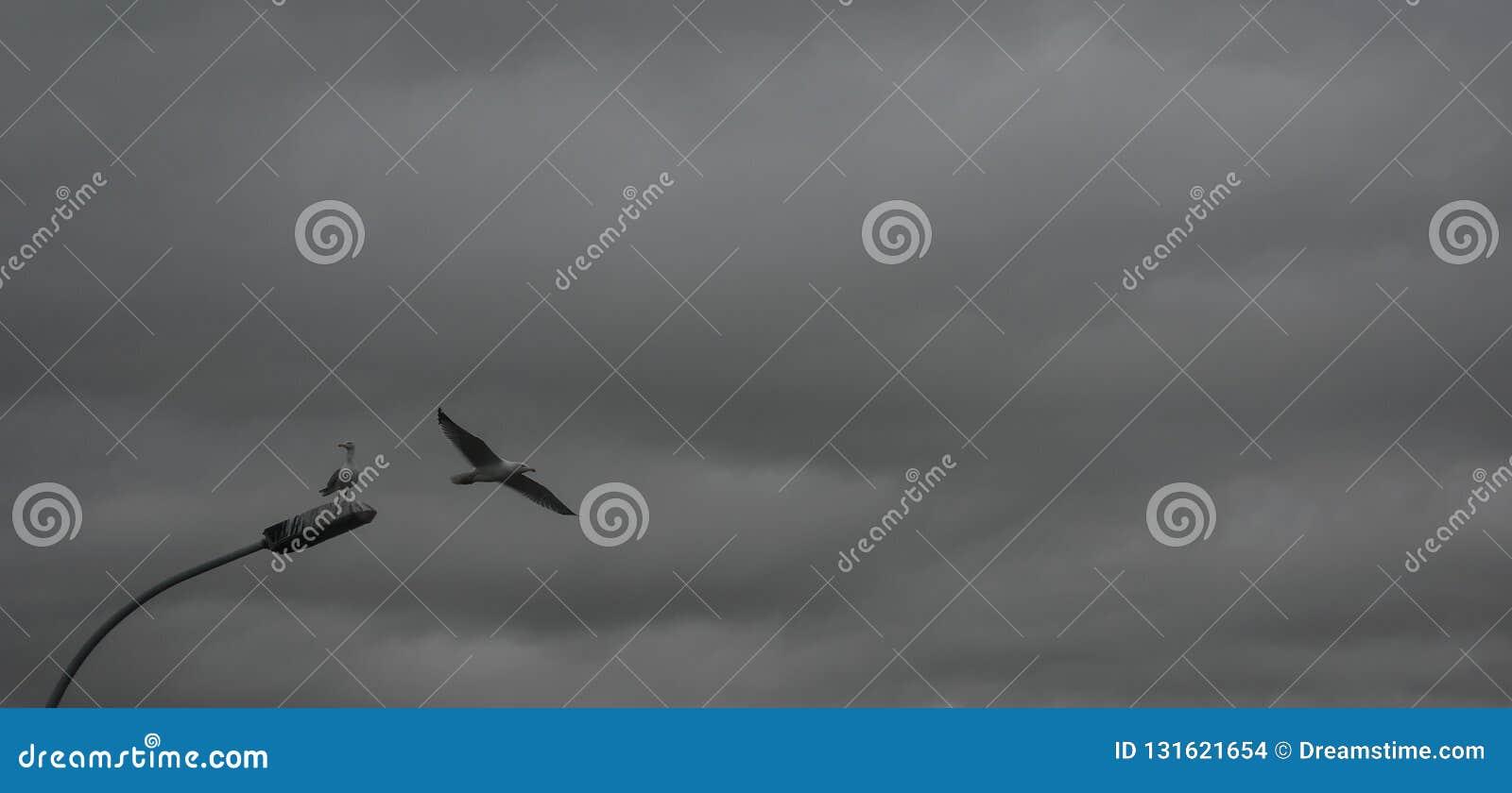 Un par de gaviotas en un día nublado