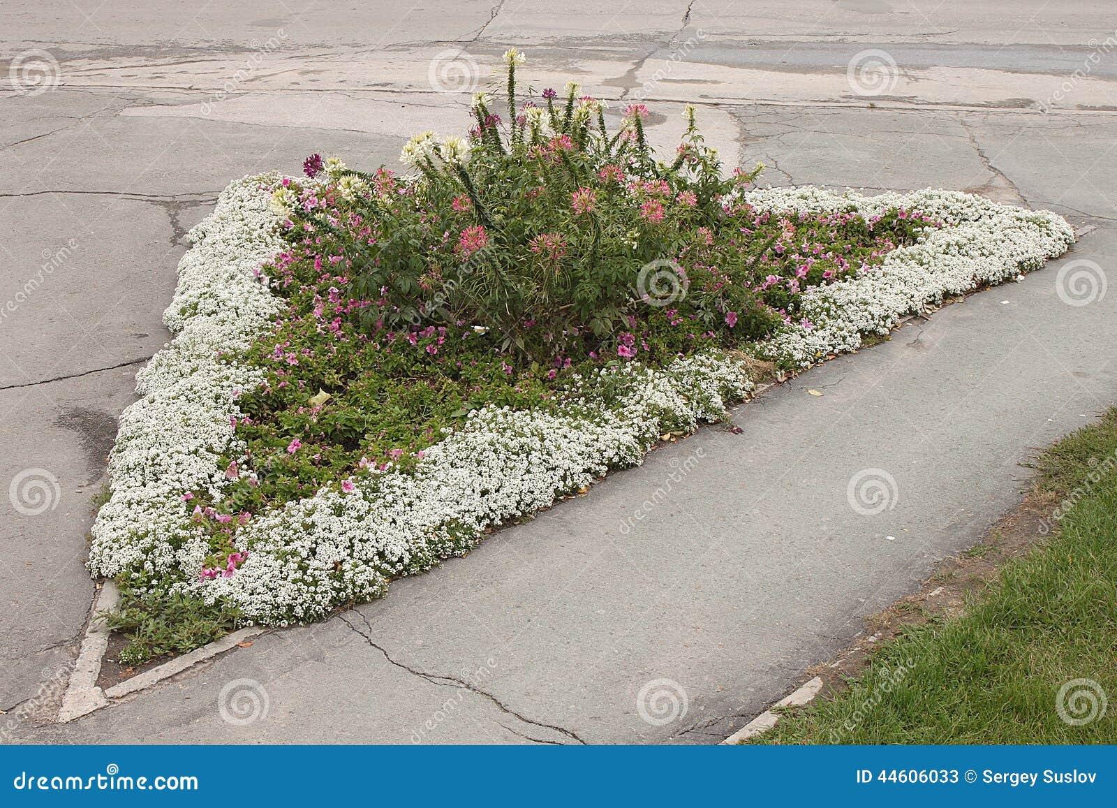 Un parterre triangulaire avec les fleurs blanches roses et pourpres dans la rue de novosibirsk for Parterre de roses photos