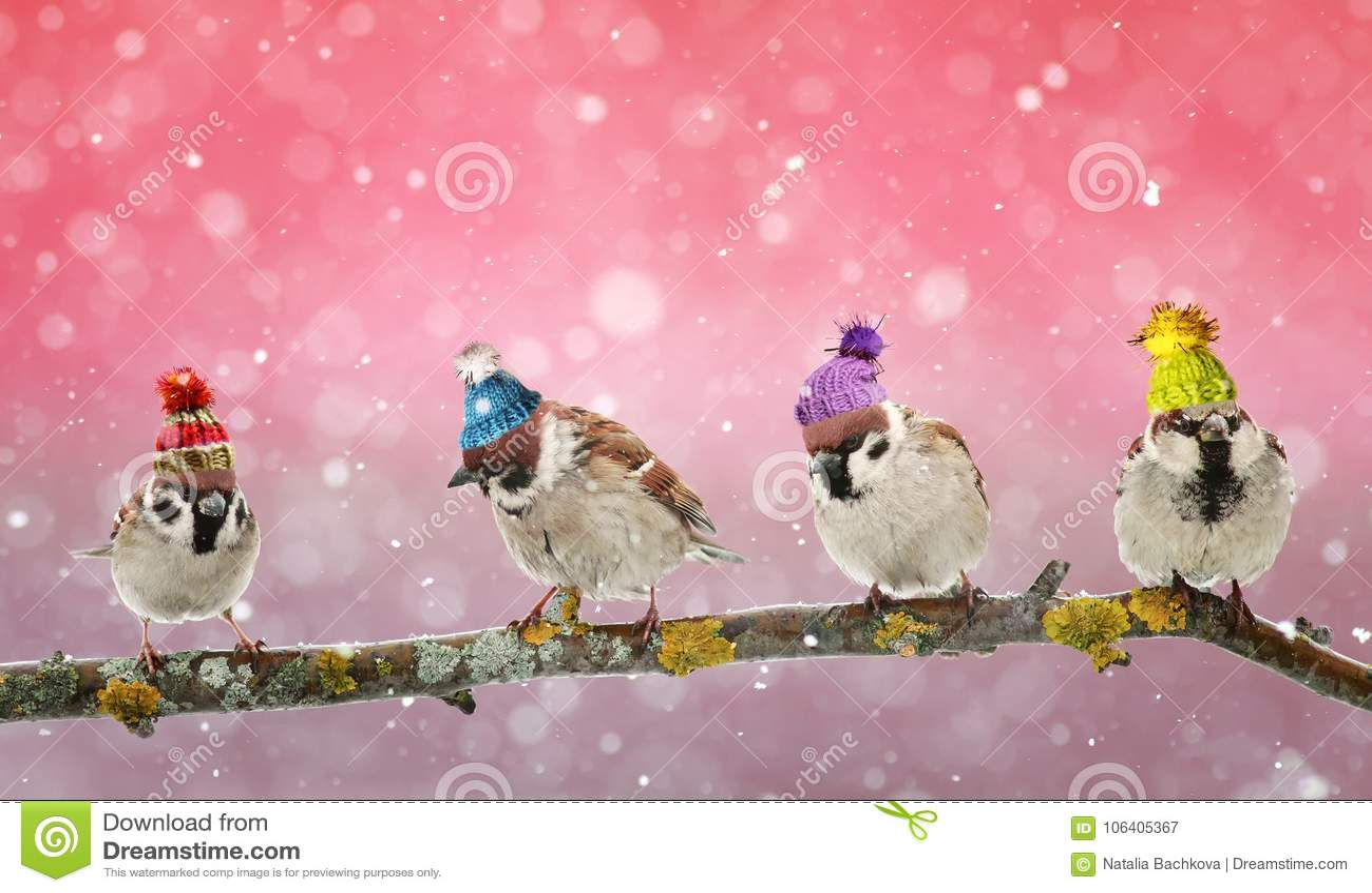 Un passero divertente di quattro uccelli che si siede su un ramo nel Natale di inverno