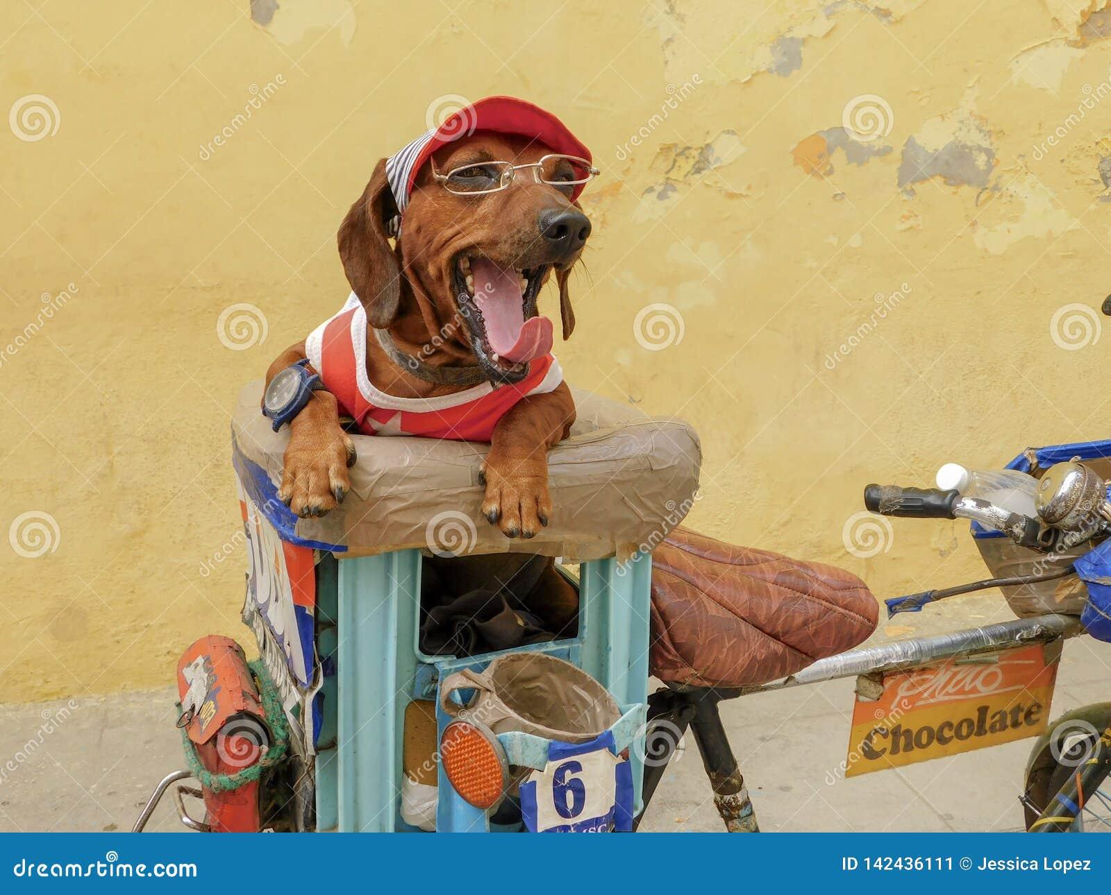 Un pequeño amigo en La Habana