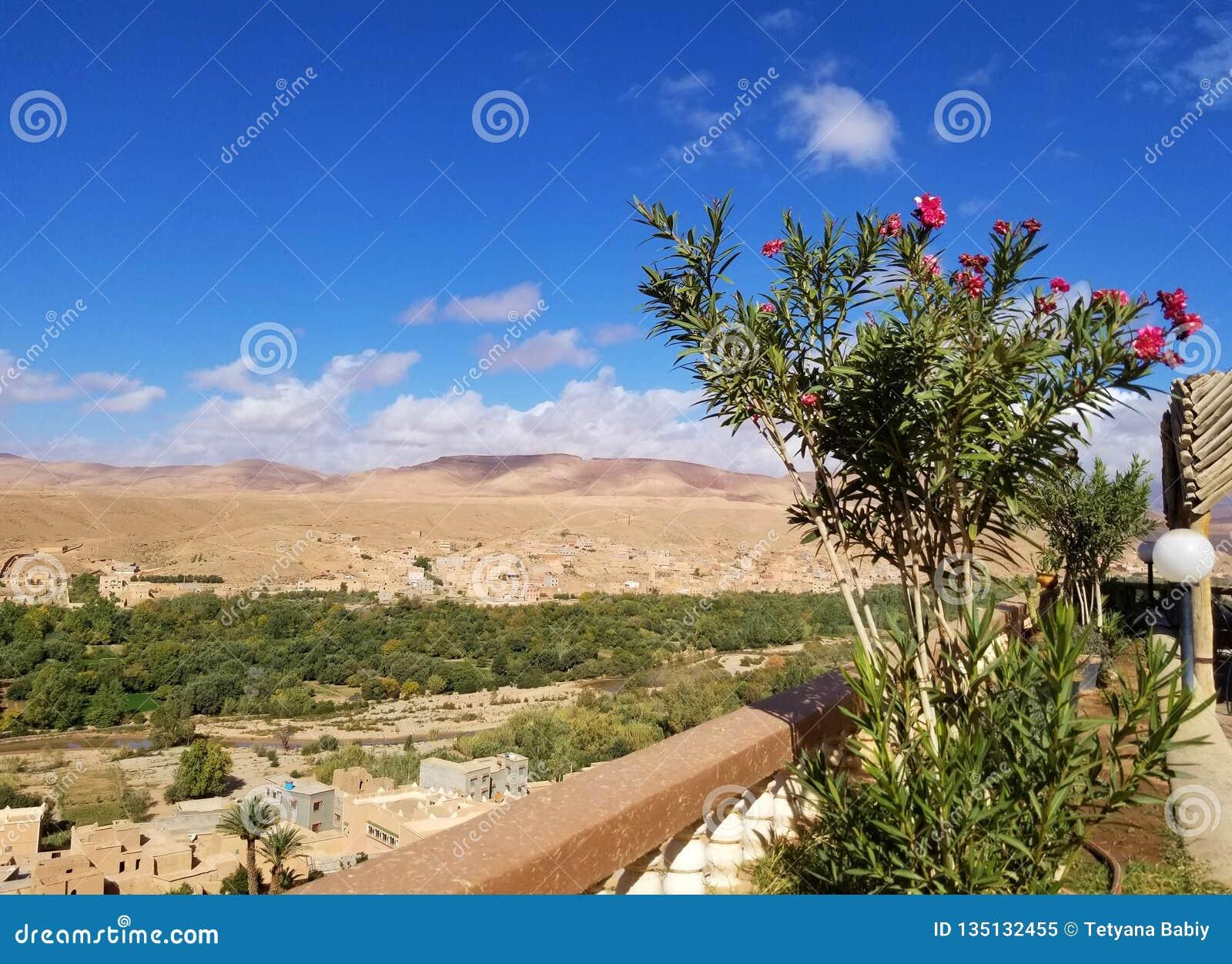 Un pequeño oasis en desierto
