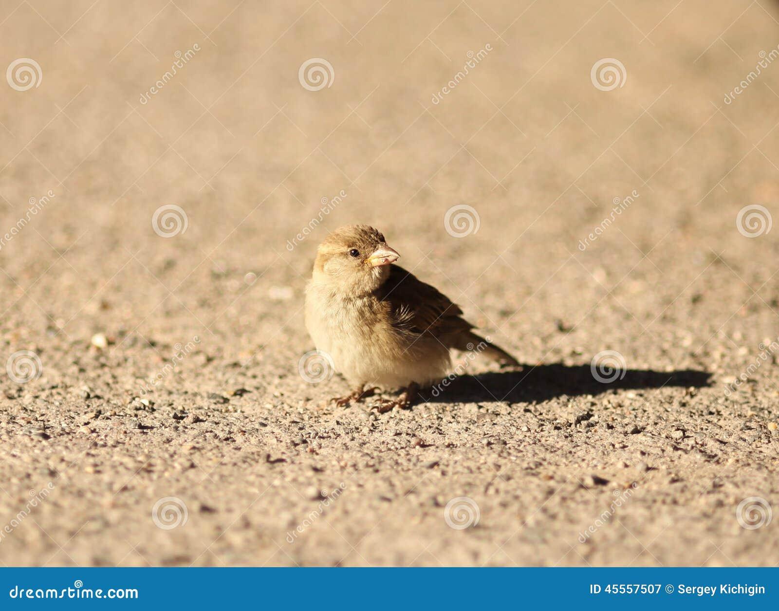 Un pequeño pájaro en una arena
