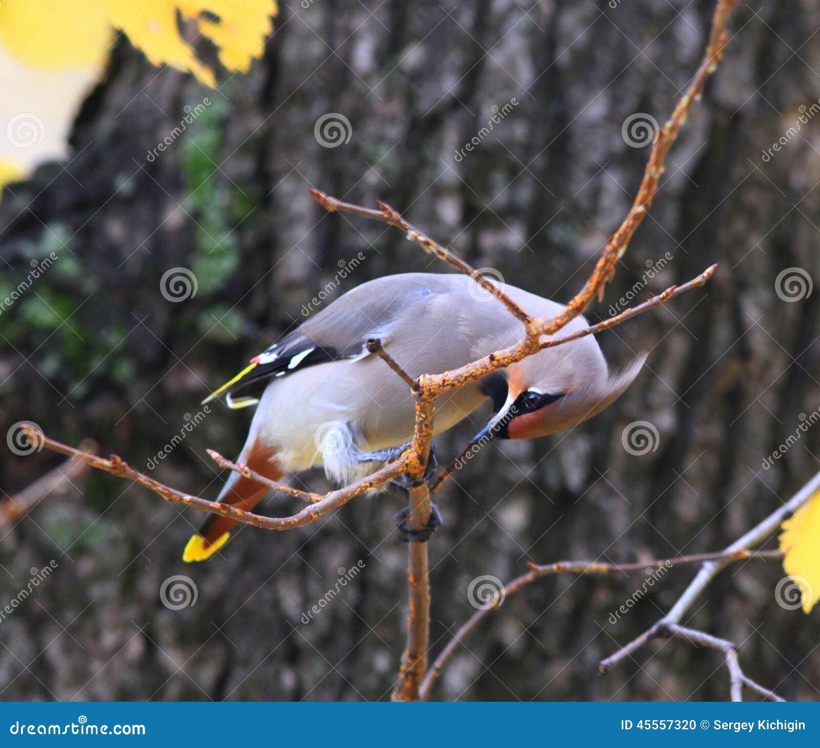 Un pequeño pájaro en una rama de árbol