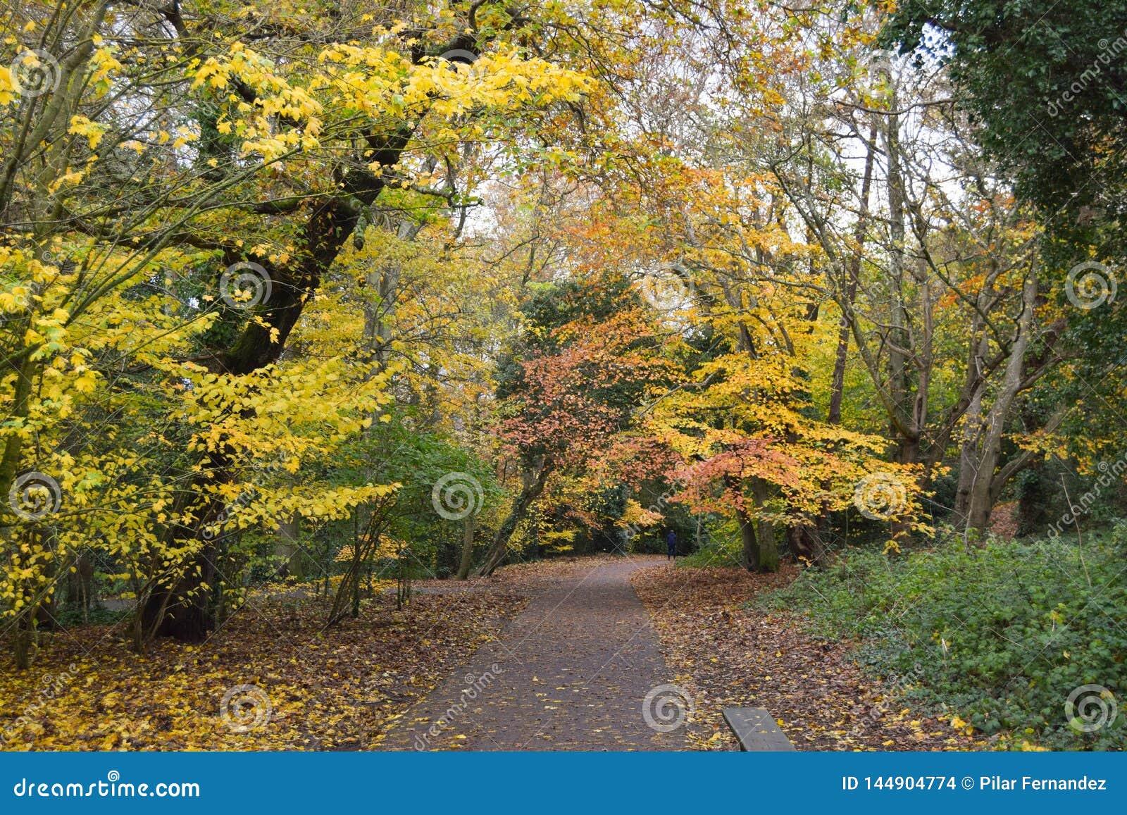 Un percorso pacifico in un parco di autunno