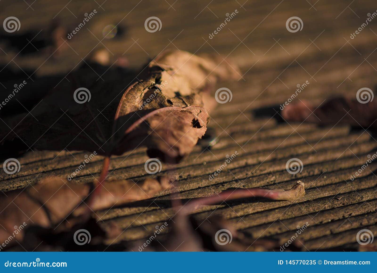 Un permesso marrone al sole della sera su un pavimento di legno