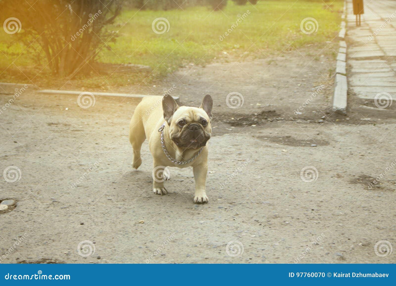 Un perro aljofifa