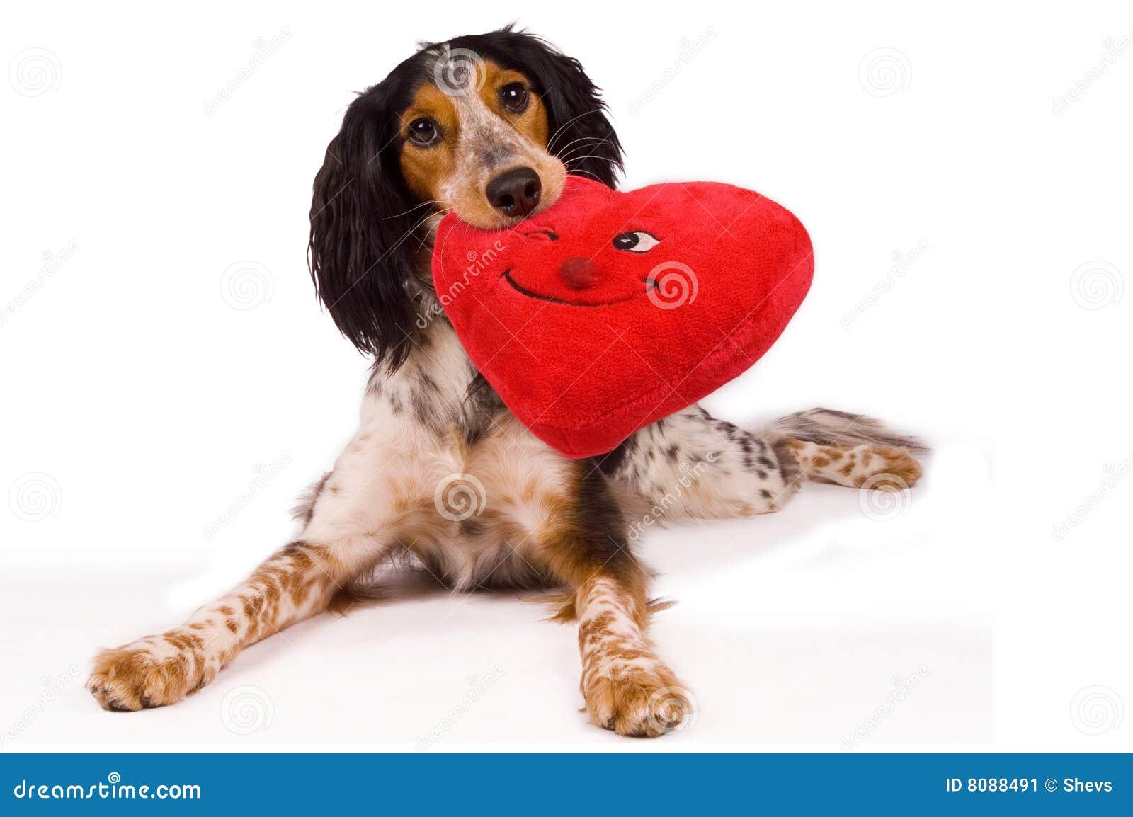 Un perro cariñoso
