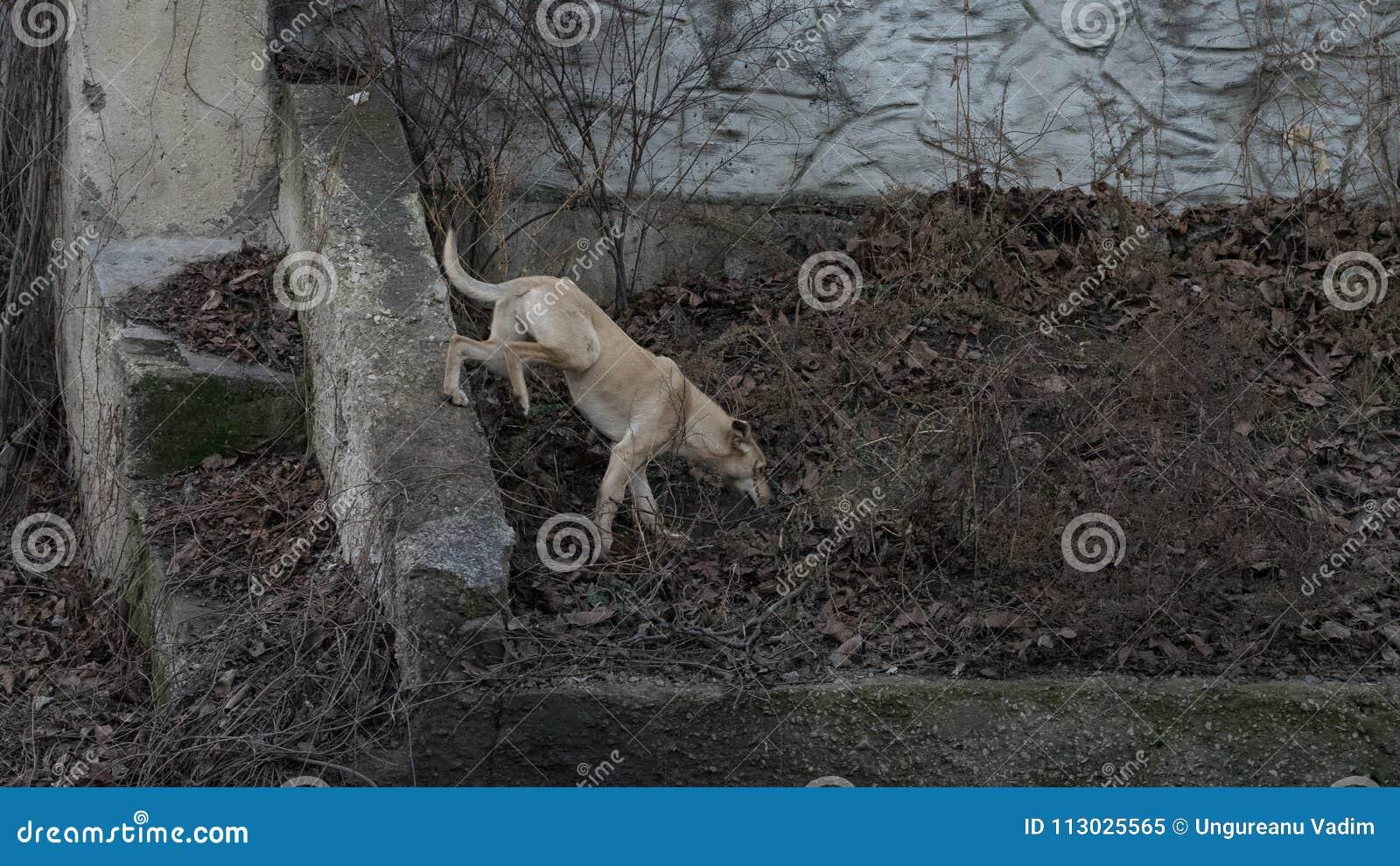 Un perro de la calle que corre a través de las hojas de otoño