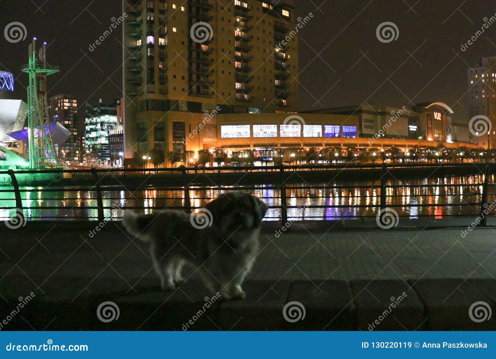 Un perro delante de Manchester, vista nocturna de Lowry