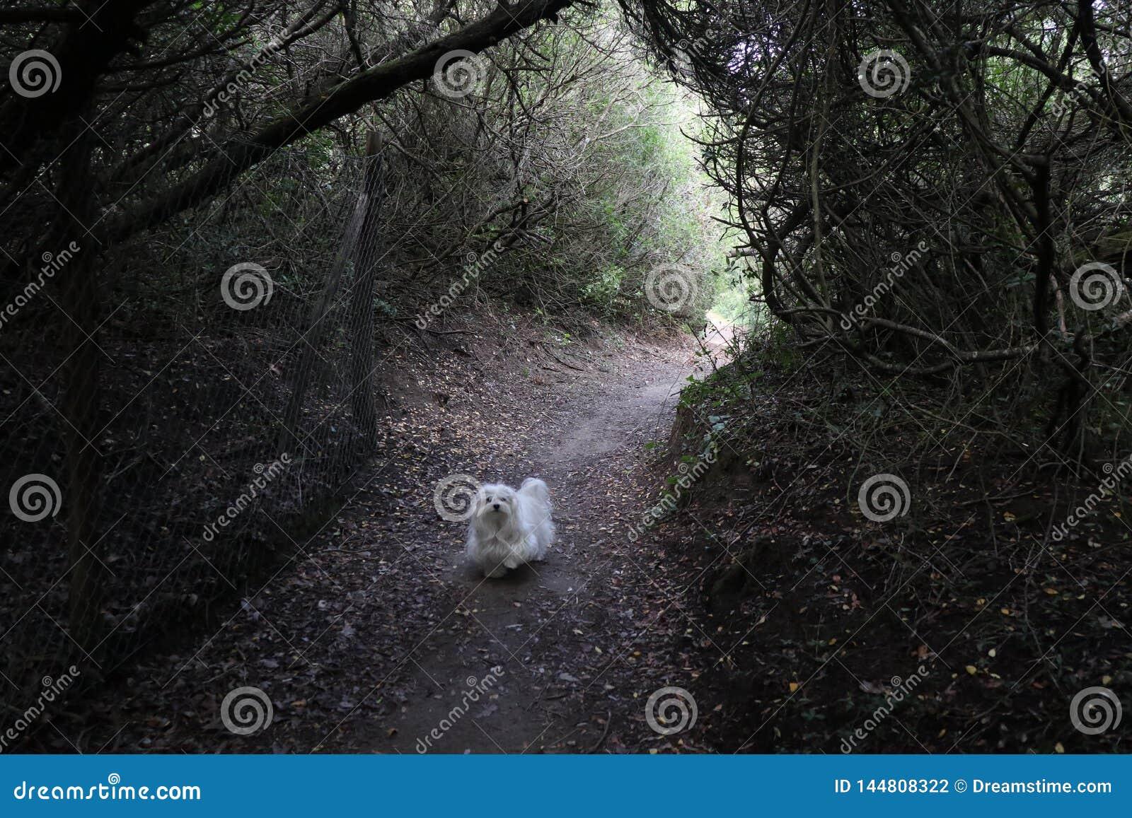 Un perro en bosque