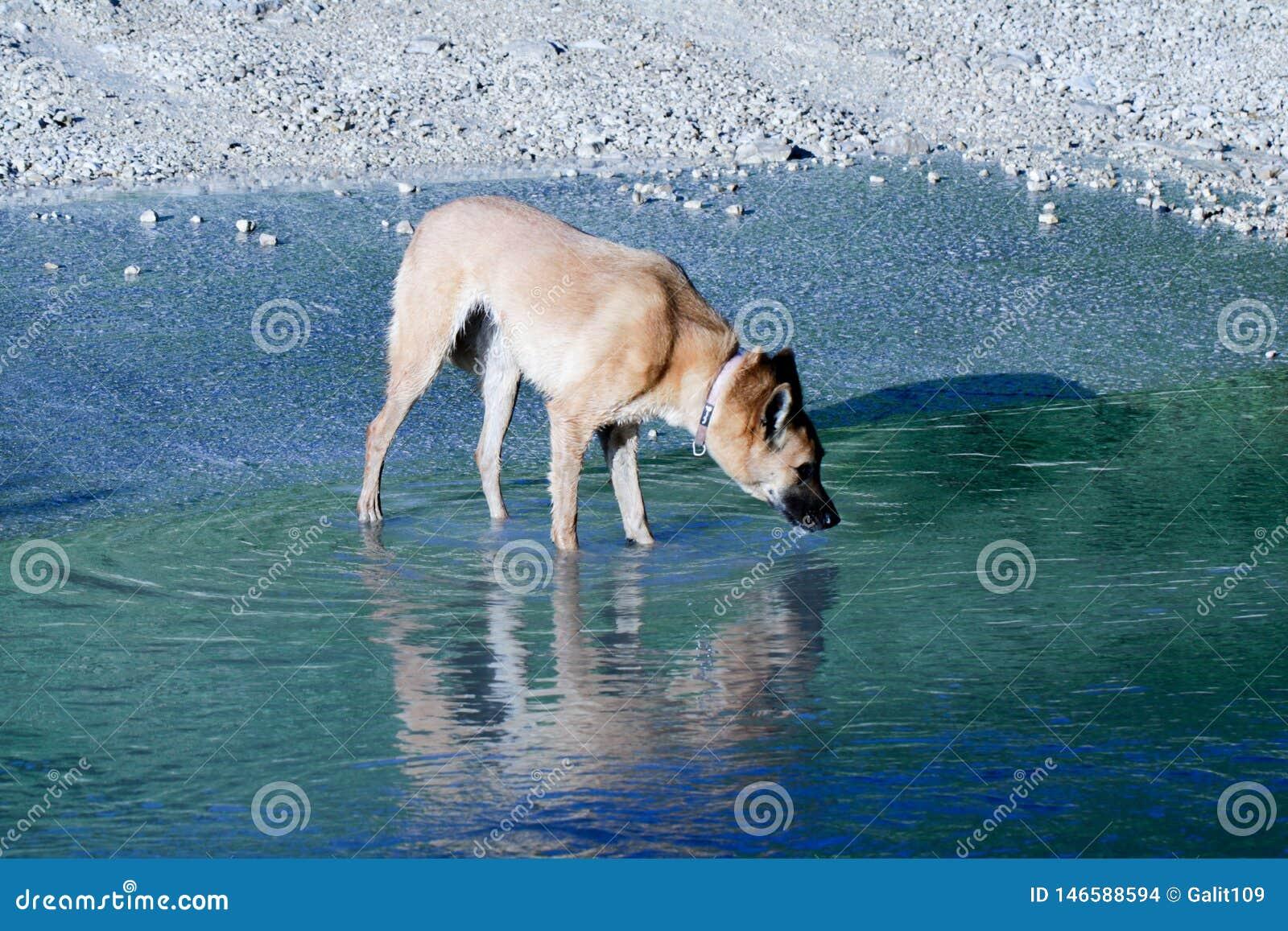 Un perro en una piscina de agua en la puesta del sol