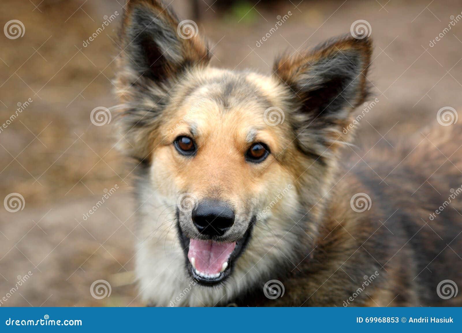 Un perro es un amigo del hombre