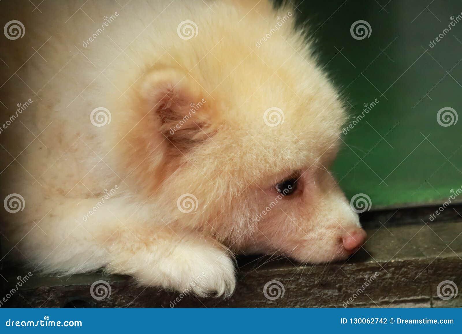 Un perro soñoliento