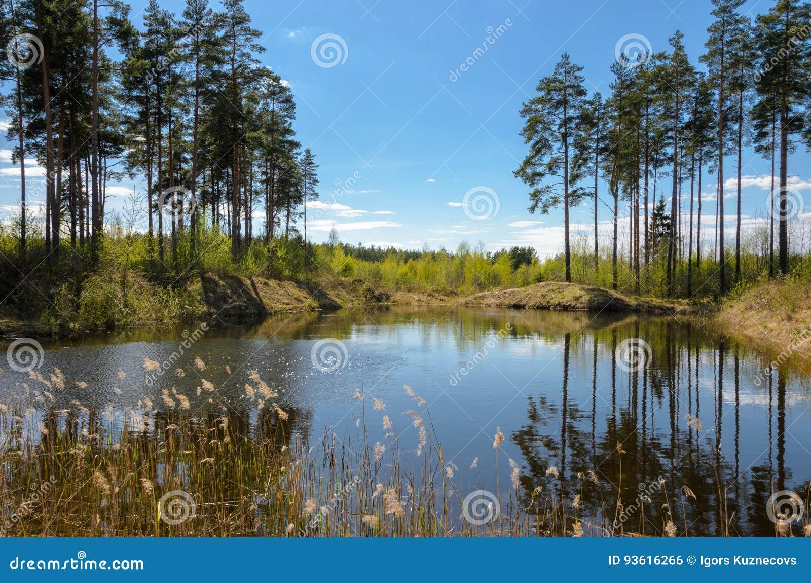 Un petit étang