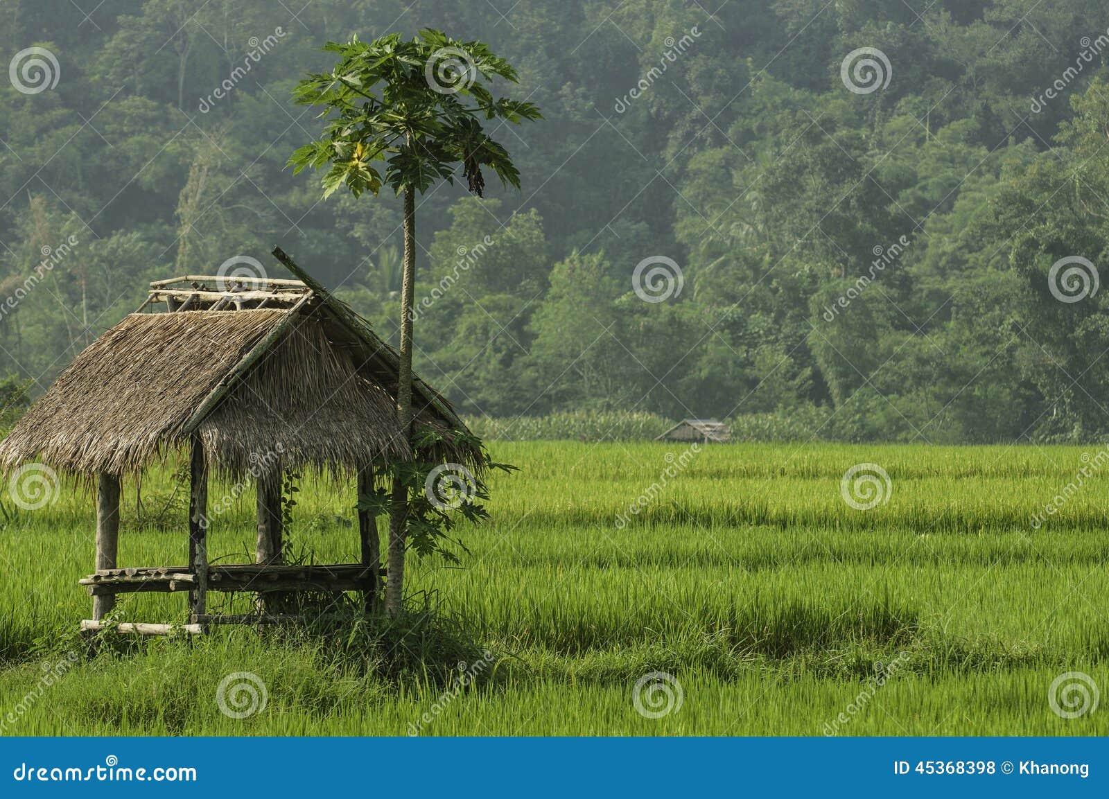 Un petit cottage au milieu