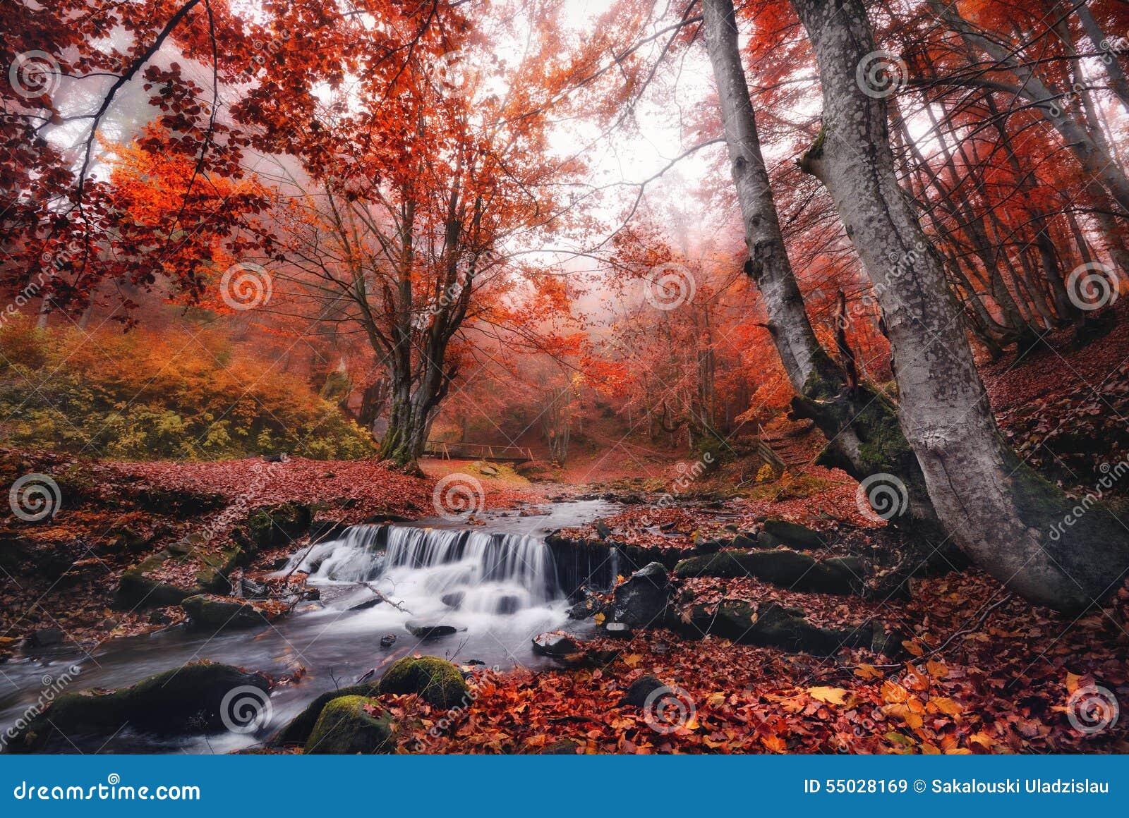 Un petit courant de montagne, entouré par la forêt brumeuse avec un bon nombre de lettres des feuilles tombées