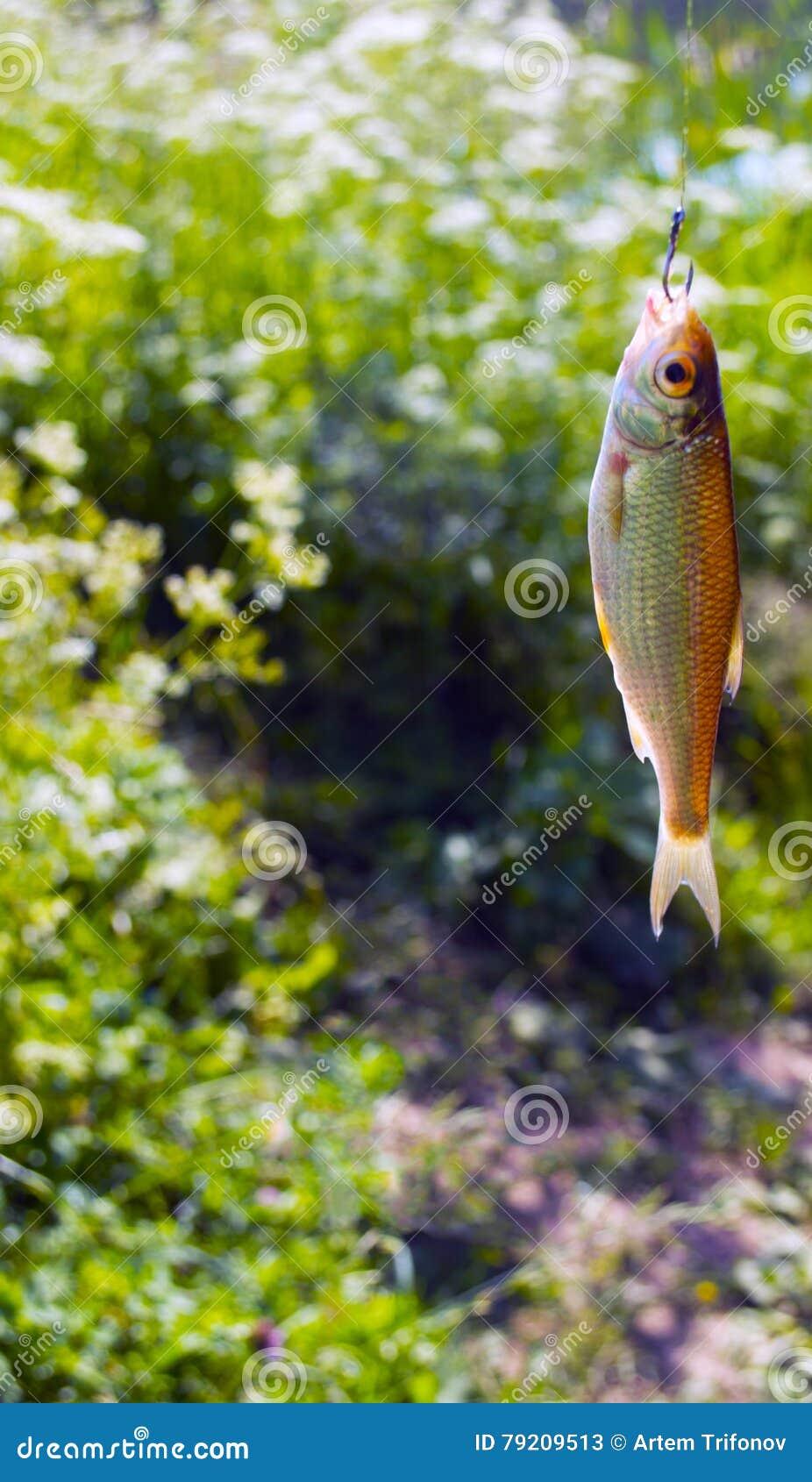 Un petit poisson s est propagé un crochet, sur un fond d herbe verte