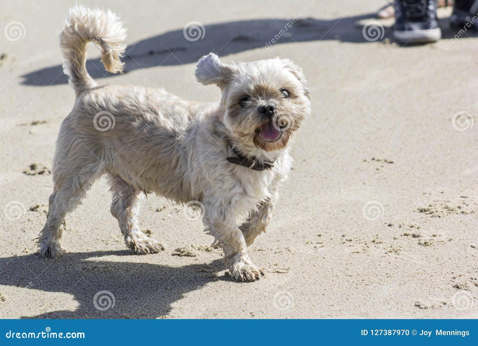 Un piccolo cane