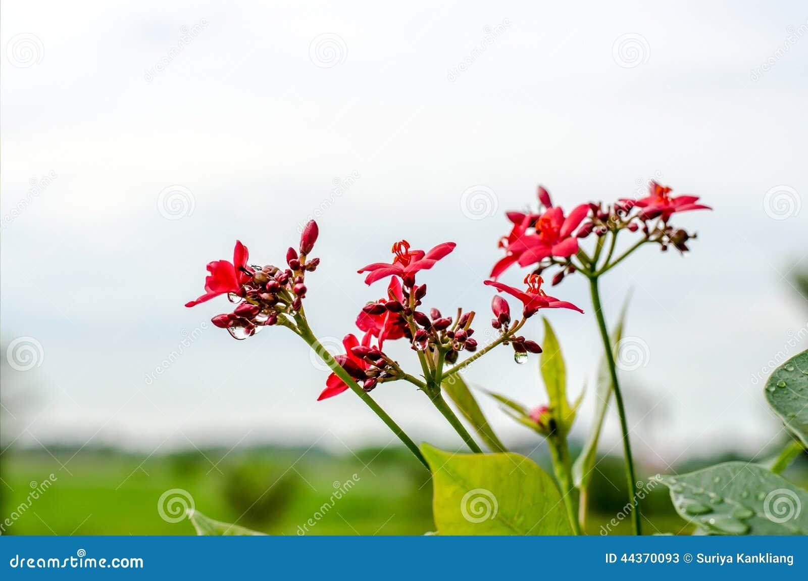 Un piccolo fiore selvaggio