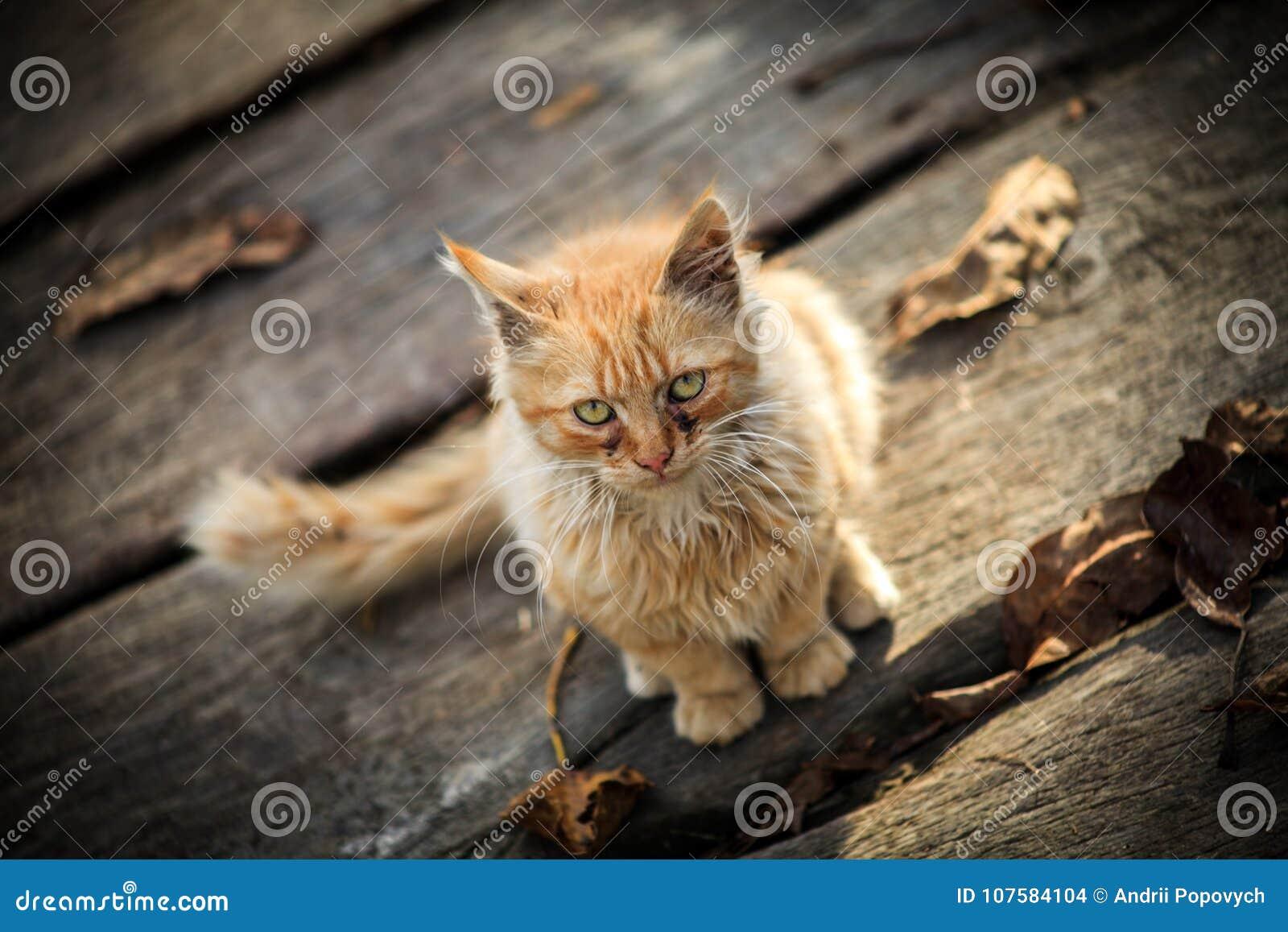 Un piccolo gatto rurale