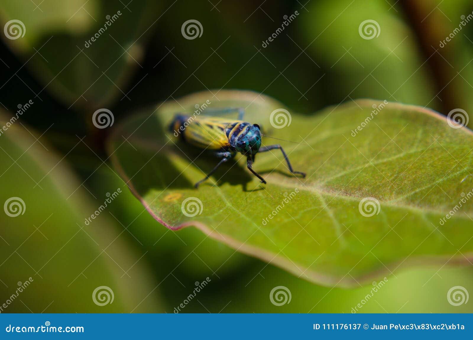 Un piccolo insetto in Machu Picchu