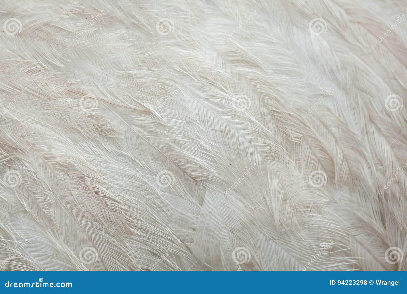 Un plus grand nandou de nandou americana Texture de plumage