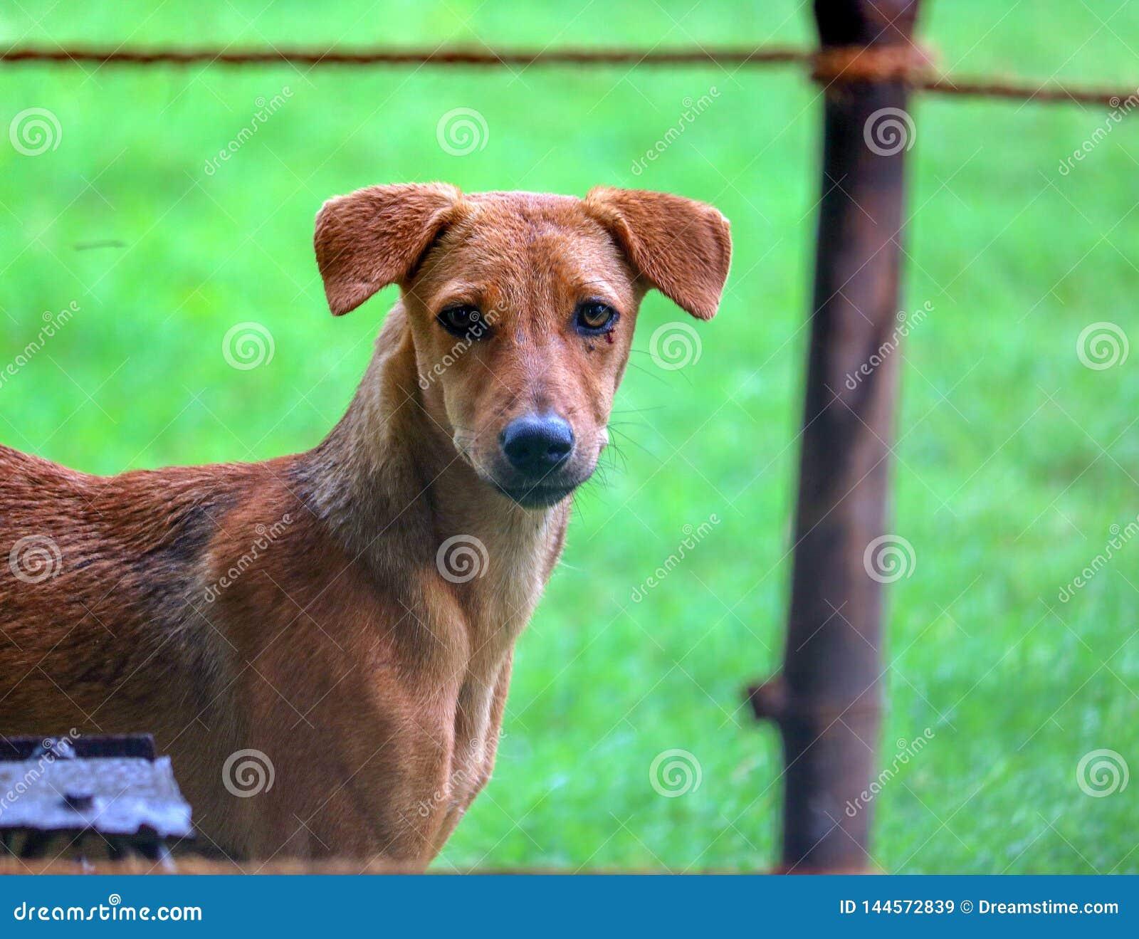 Un portrait d un chien