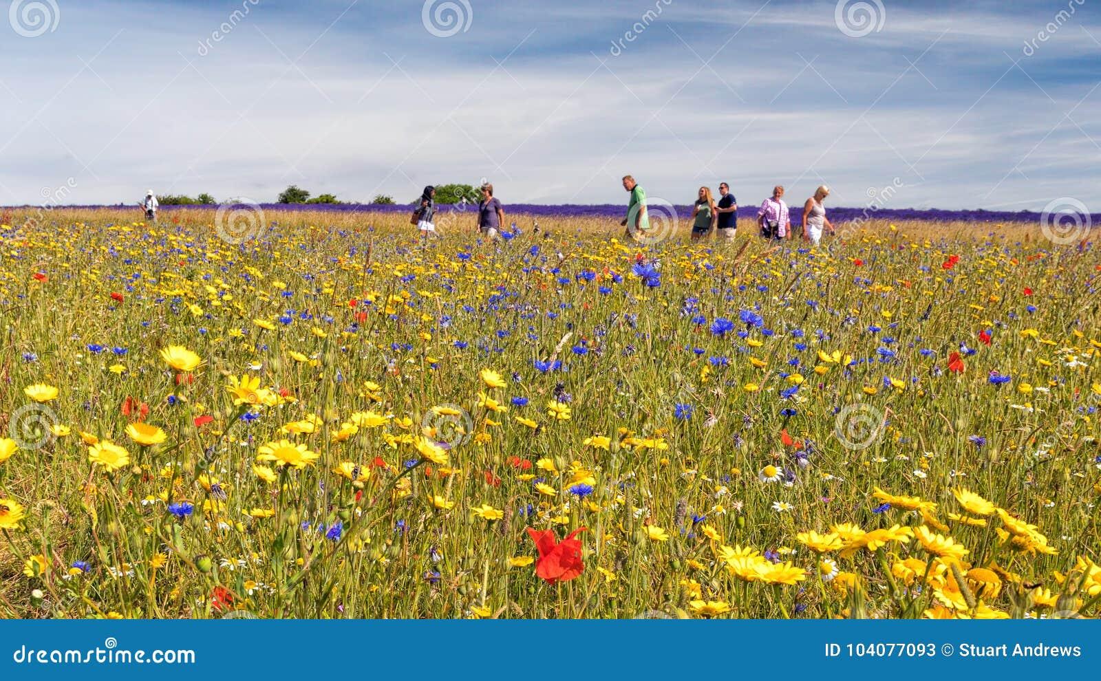 Un prado colorido del Wildflower, Worcestershire, Inglaterra
