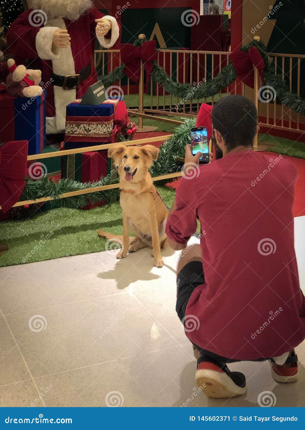 Un proprietario che prende un immagine del suo cane davanti alle decorazioni di Natale