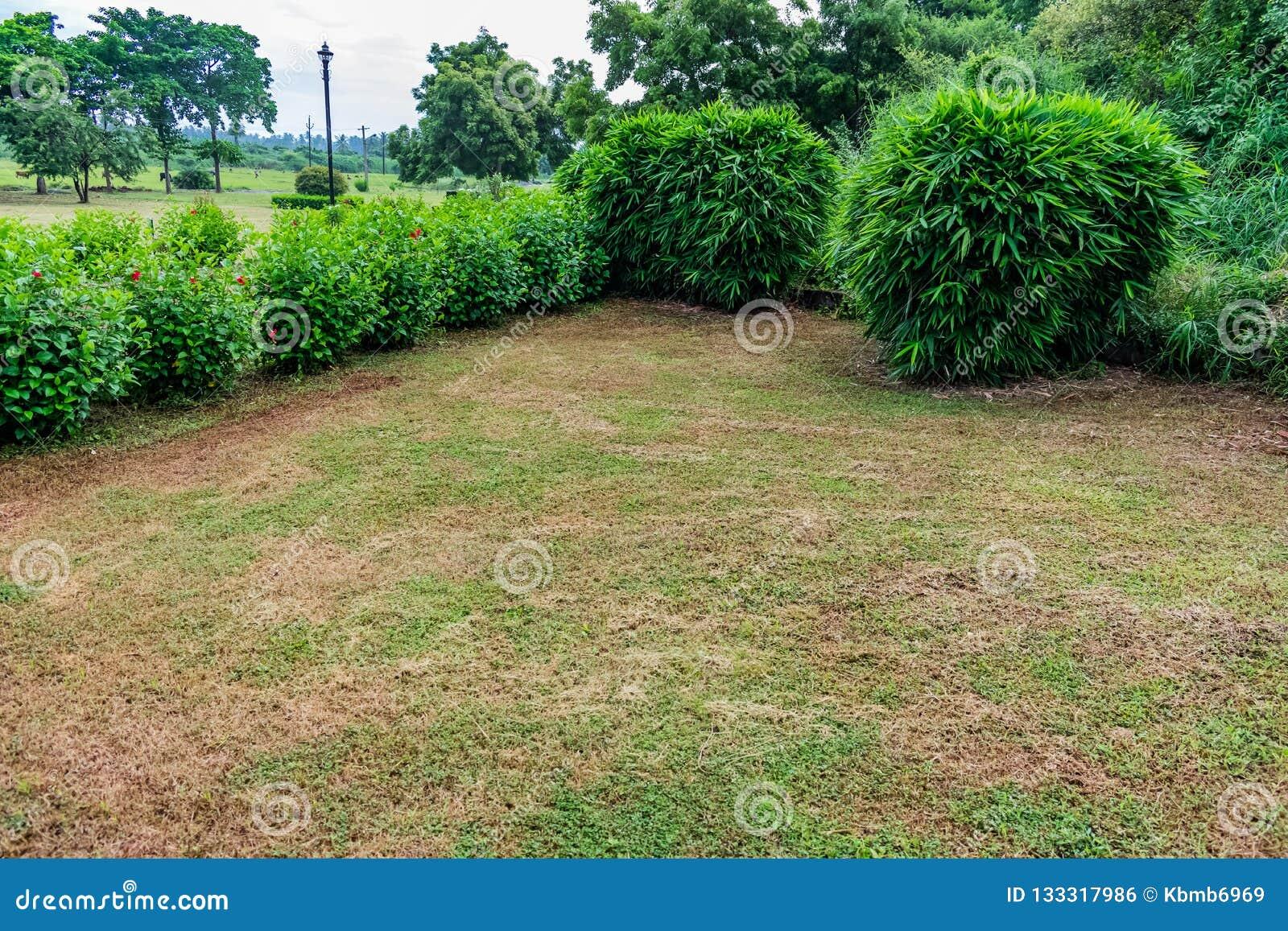 Piccoli Alberi Da Giardino un punto di vista d'angolo di piccoli arbusti di bambù dell