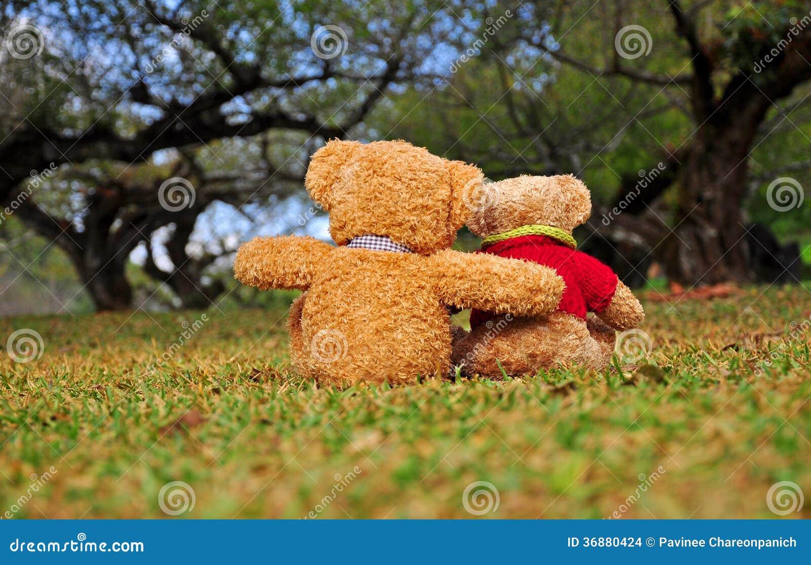 Download Un Punto Di Vista Posteriore Di Due Orsacchiotti Che Si Siedono Nel Giardino Con Amore. Fotografia Stock - Immagine di idea, cuore: 36880424