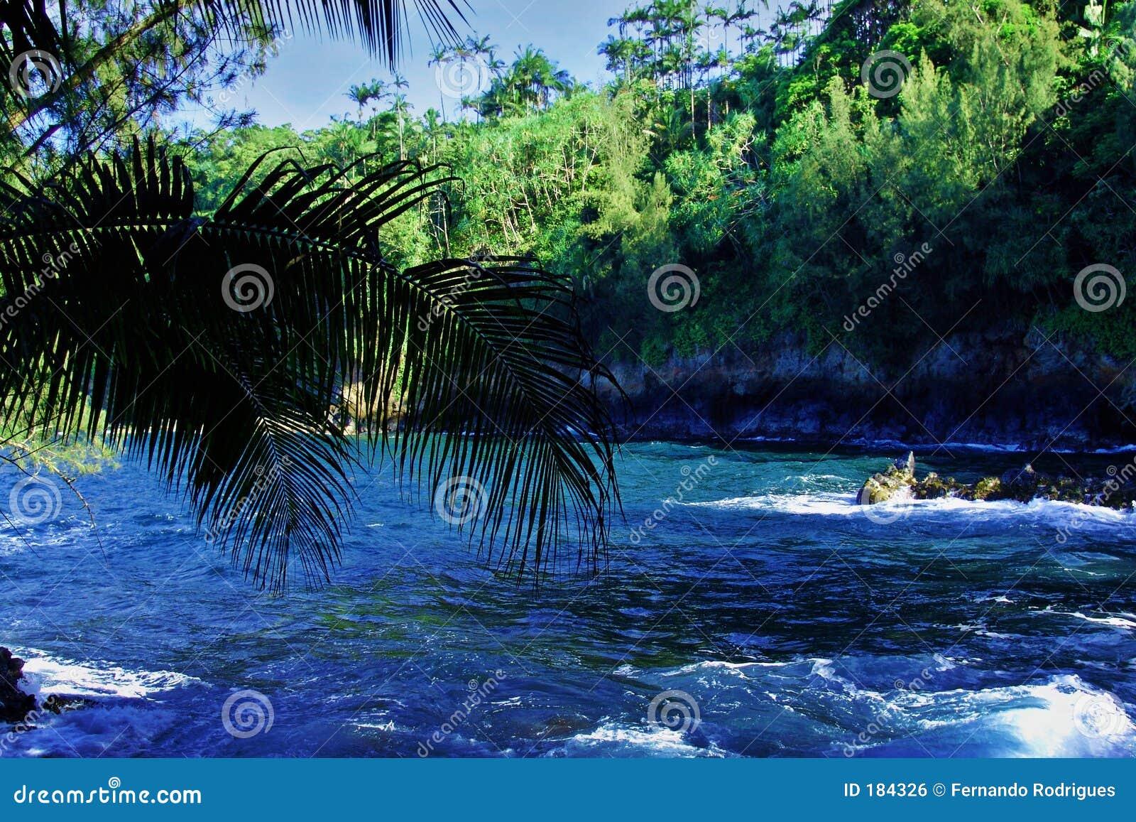Un río salvaje