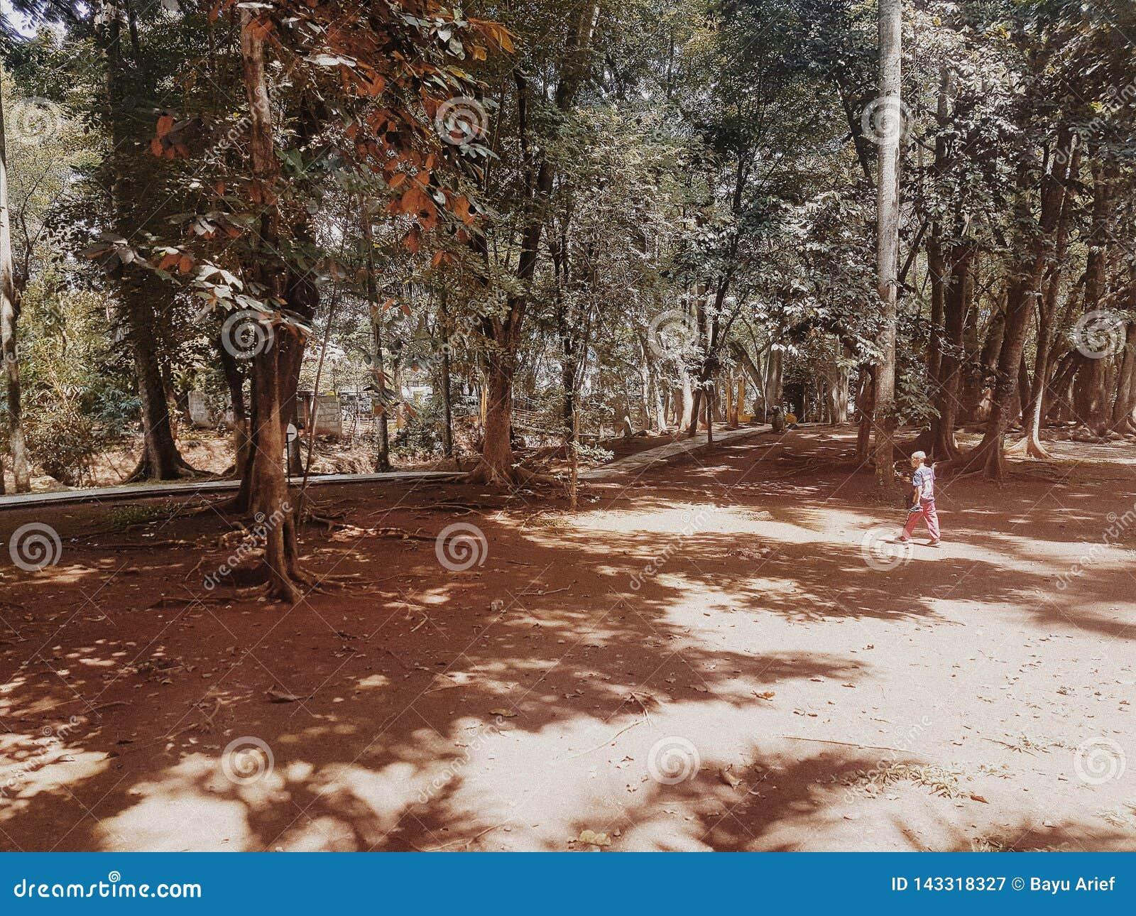 Un ragazzo che cammina da solo in una città vuota del BSD del parco