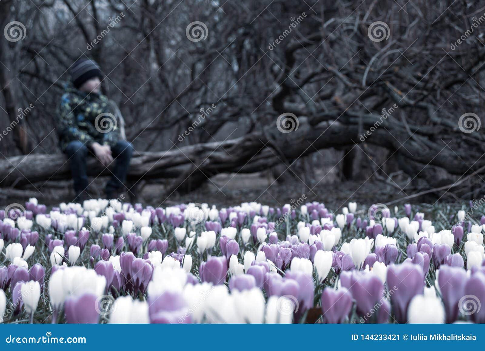 Un ragazzo triste vago che si siede su un albero caduto in parco scuro, molti fiori del croco davanti lui - è apathic, misero, tr