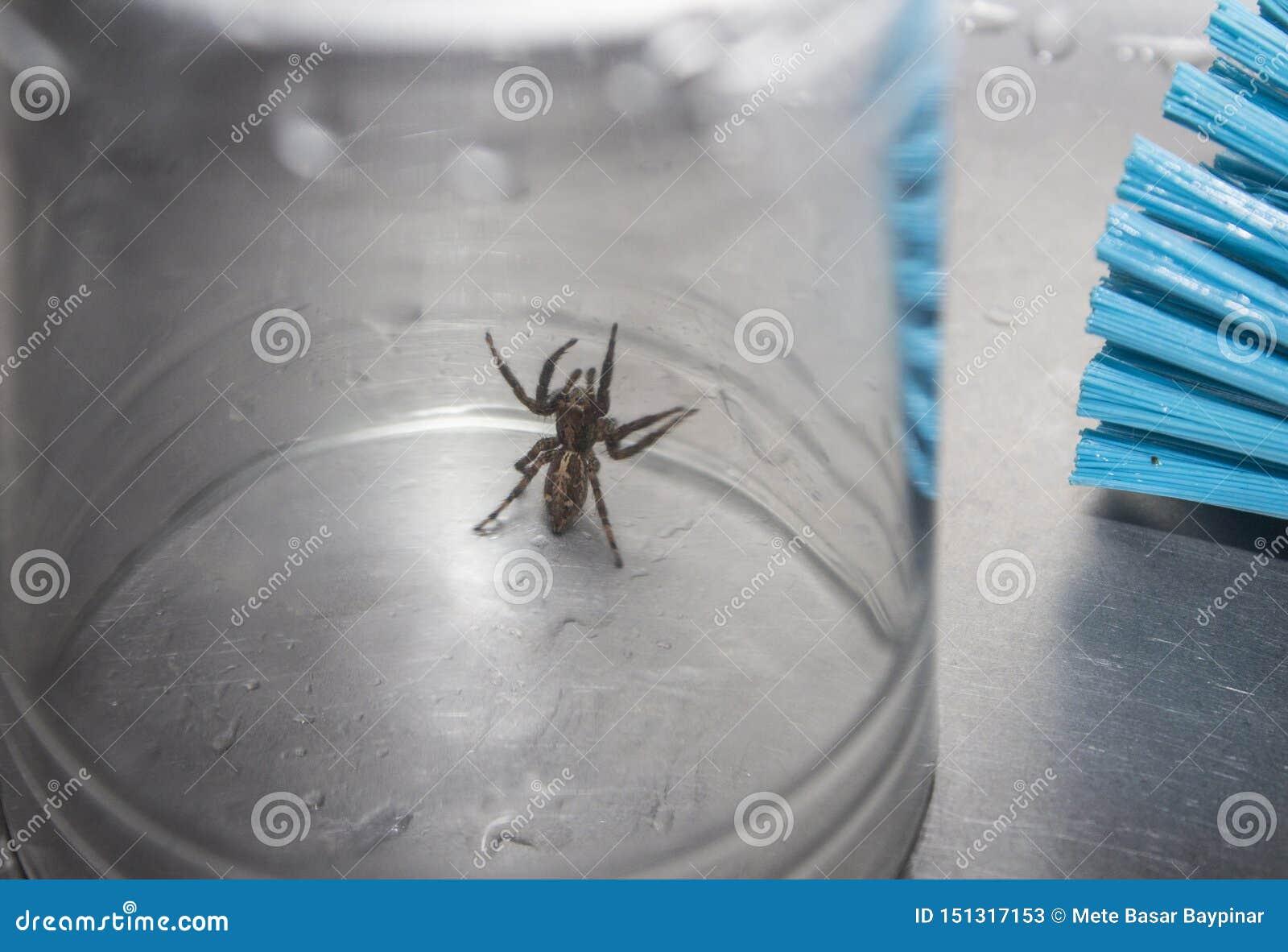 Un ragno marrone bloccato in un vetro della bevanda in un lavandino