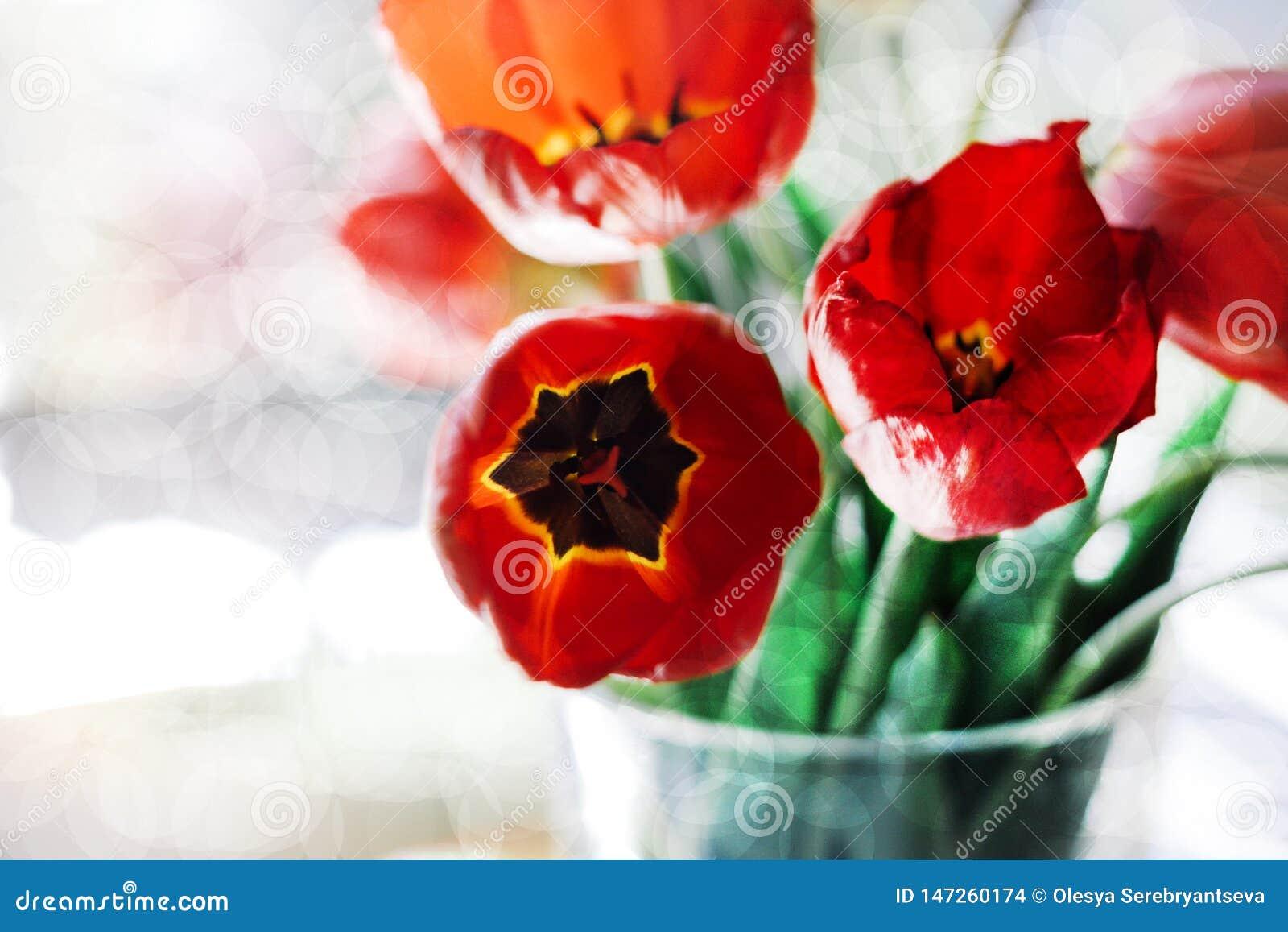 Un ramo de tulipanes rojos en un florero en el alf?izar Un regalo al día de una mujer de las flores rojas del tulipán
