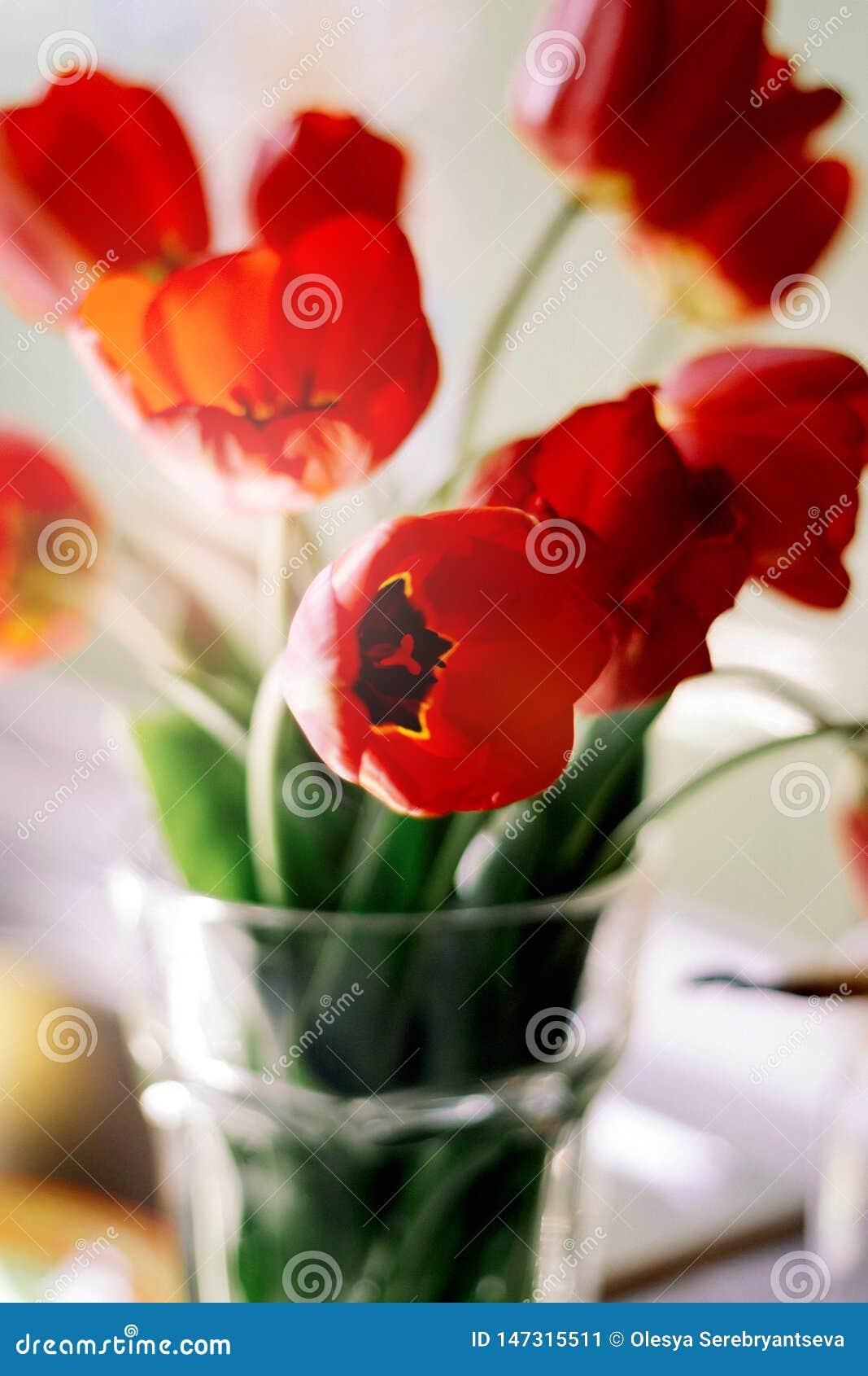 Un ramo de tulipanes rojos en un florero en el alf?izar Un regalo al d?a de una mujer de las flores rojas del tulip?n