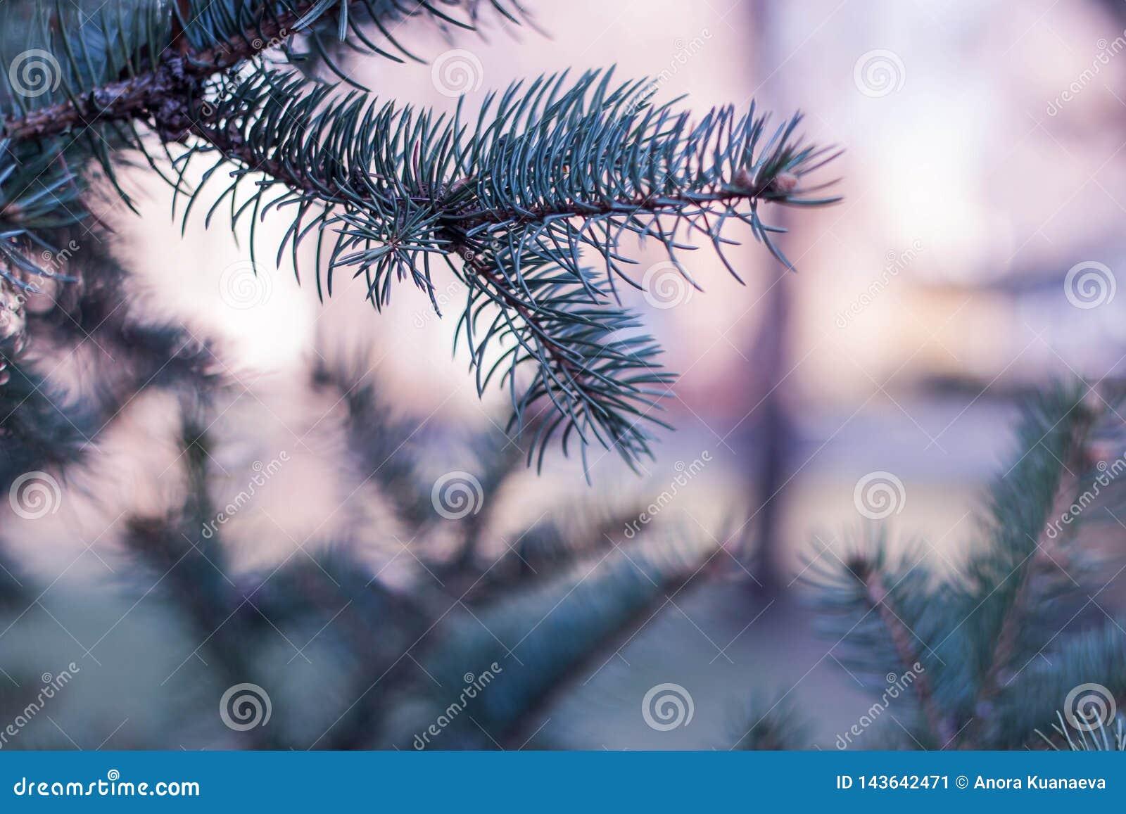 Un ramo solo