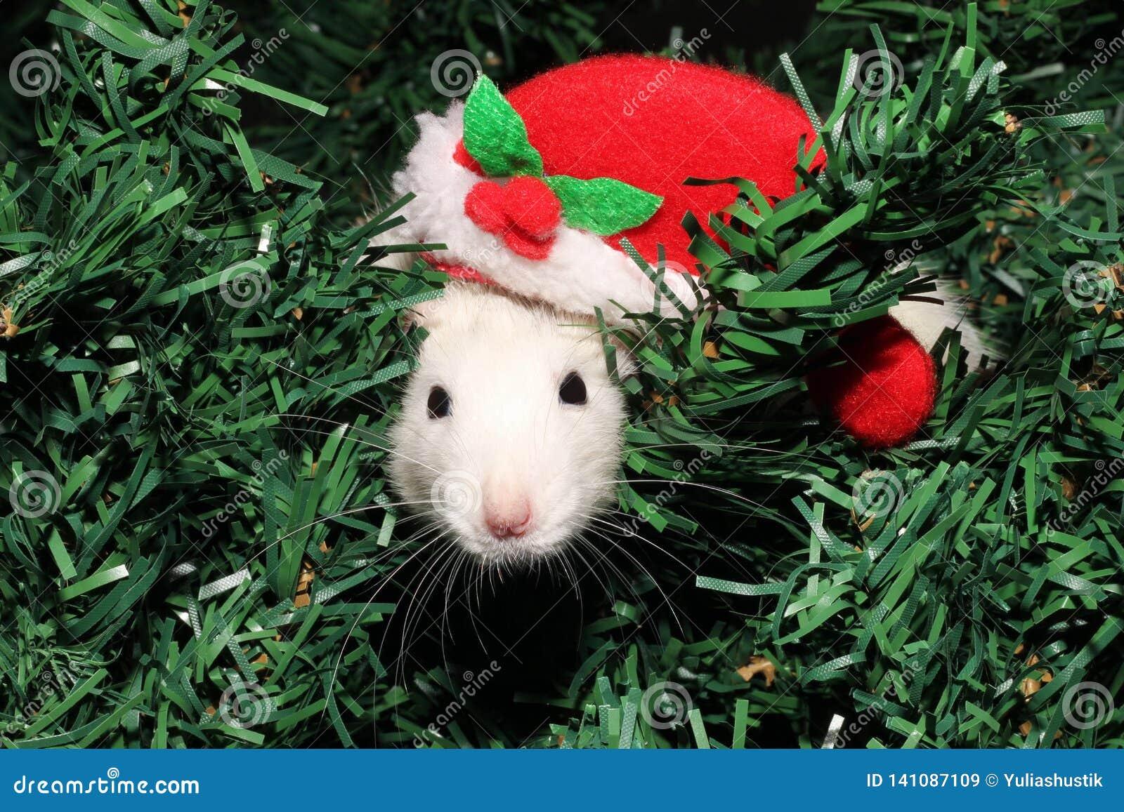 Calendario Cinese 2020.Un Ratto In Un Cappello Di Natale Un Topo Di Natale Simbolo