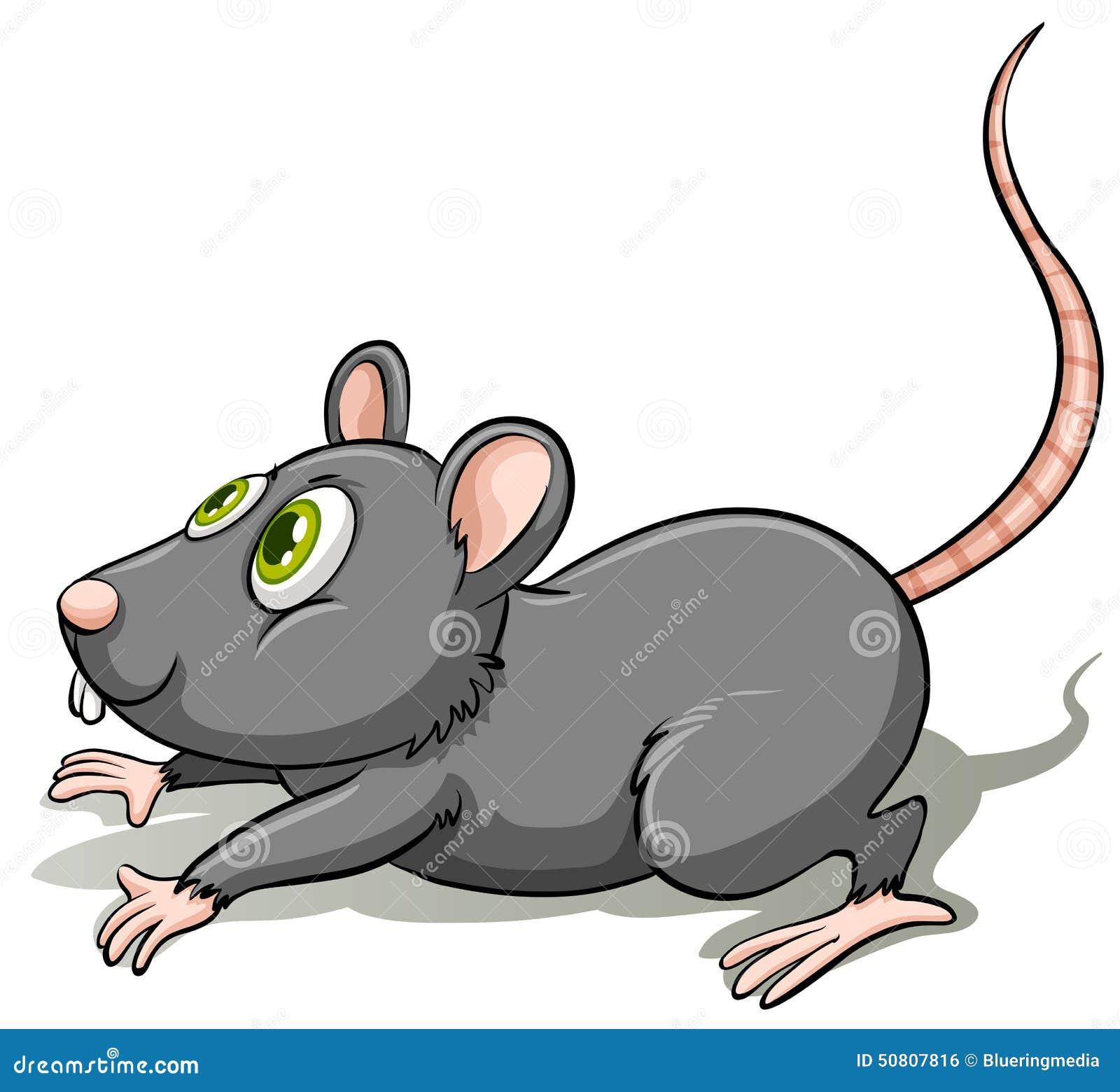 Un ratto grigio