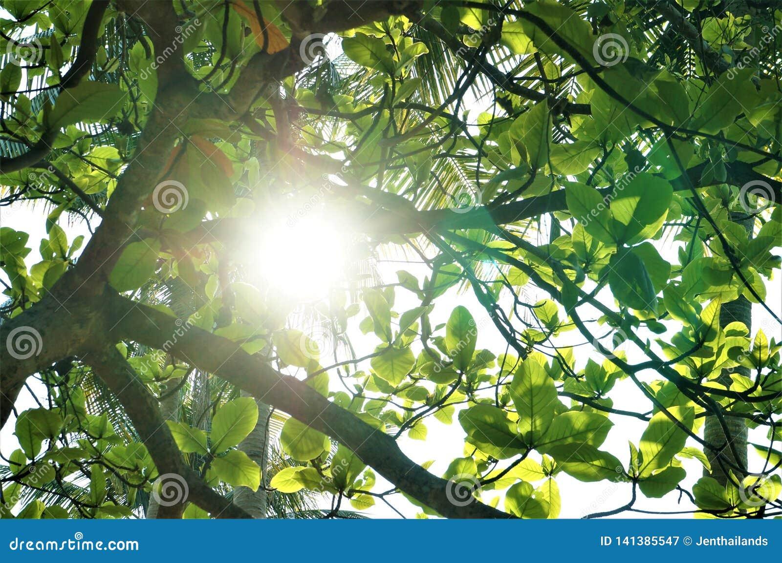 Un rayo de la sol que perfora a través de las hojas