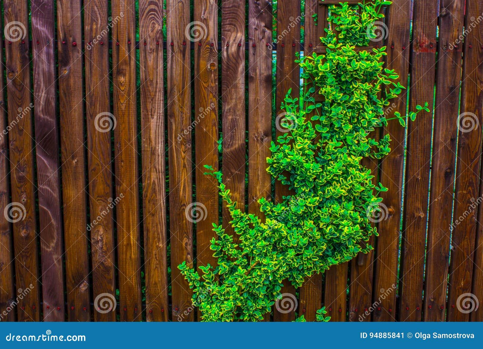 Un recinto di legno tessuto con le fruste Fondo nave