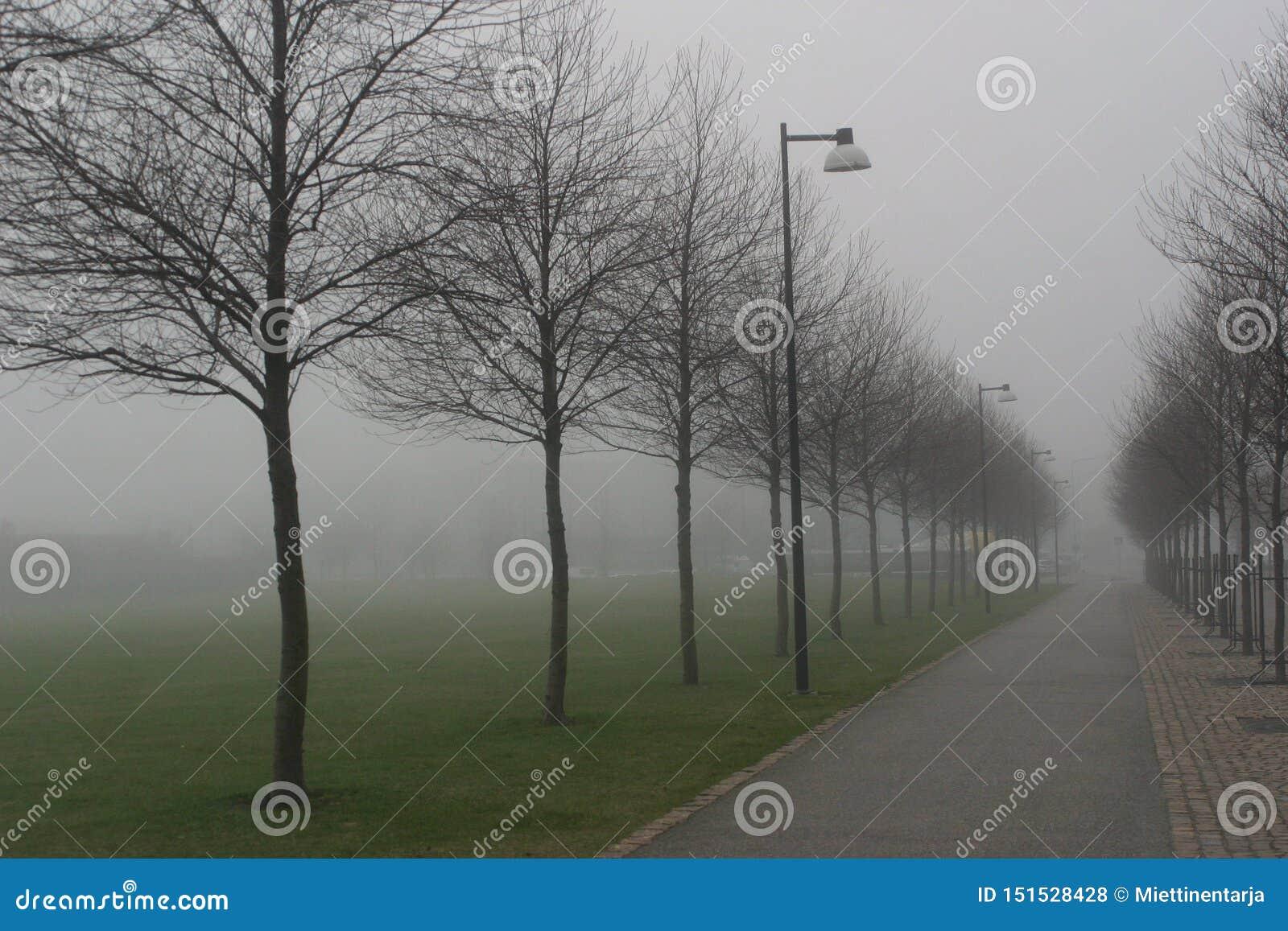 Un roud brumeux avec des réverbères et des arbres