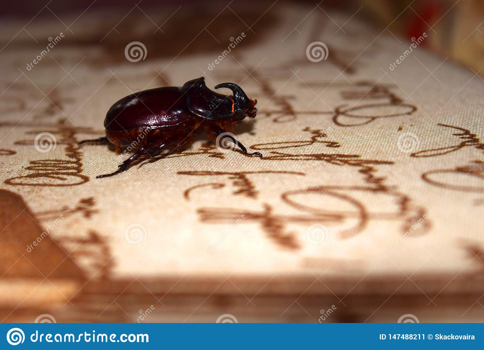 Un scarabée de rhinocéros rare se repose sur la table dans la perspective de ce qui est écrit