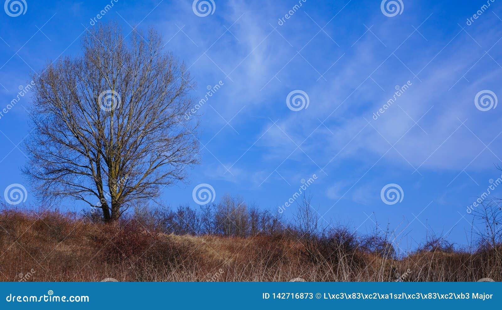 Un seul arbre